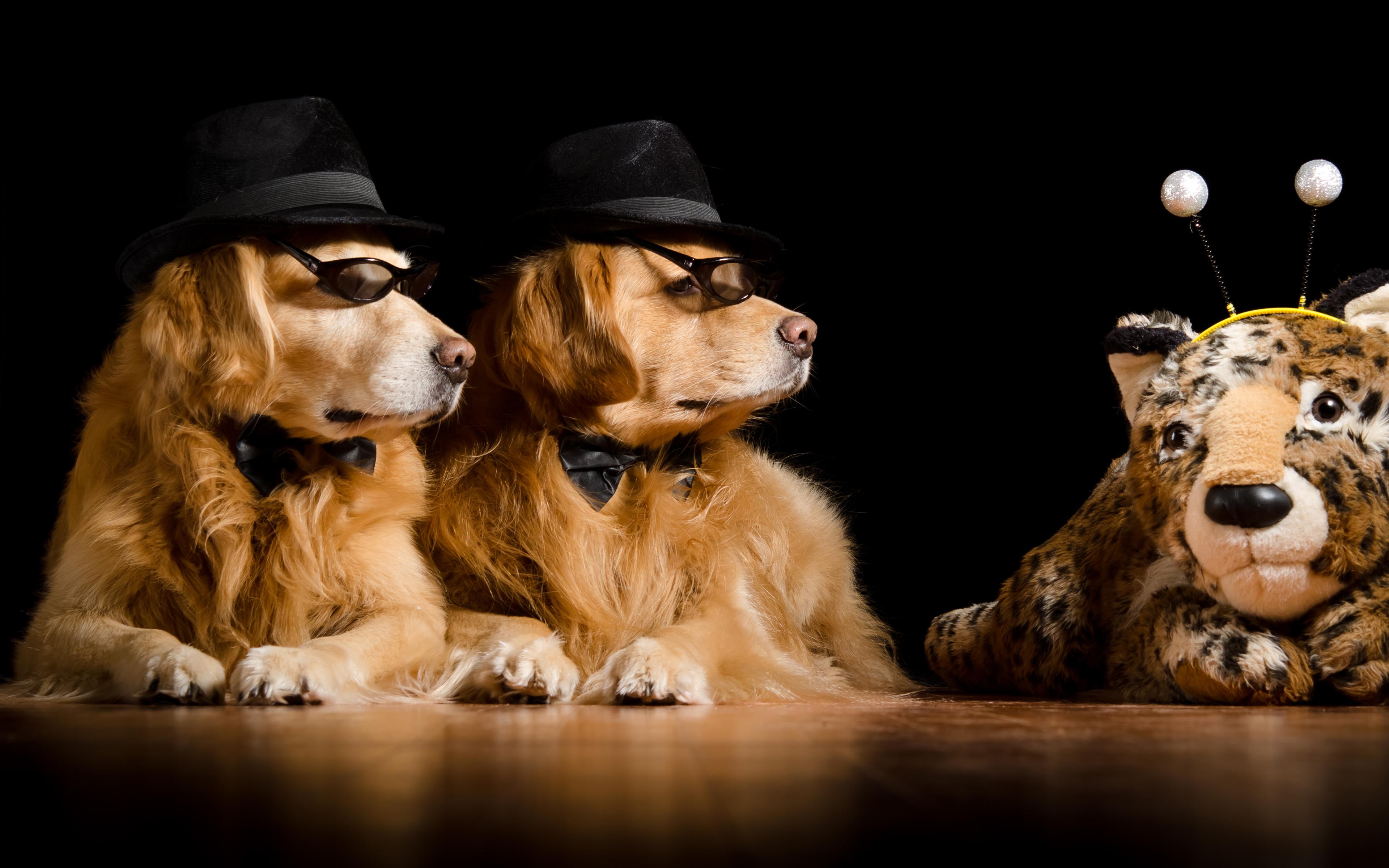 Певец собака юмор очки  № 1527434 без смс