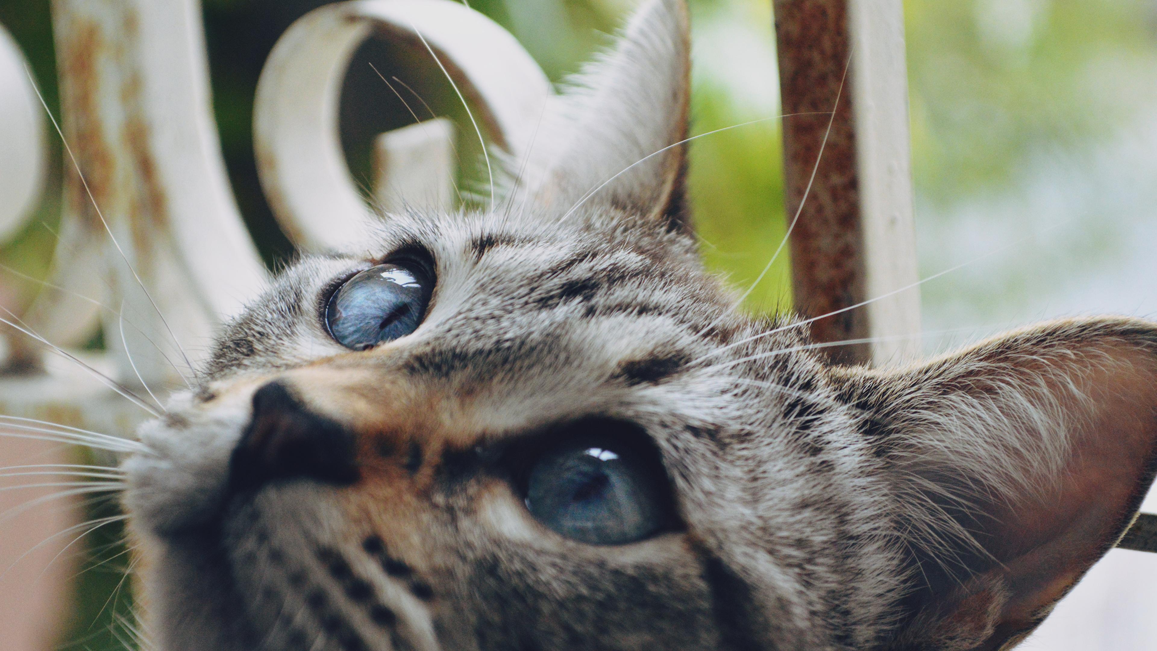 кошка глаза шерсть  № 1963676 без смс