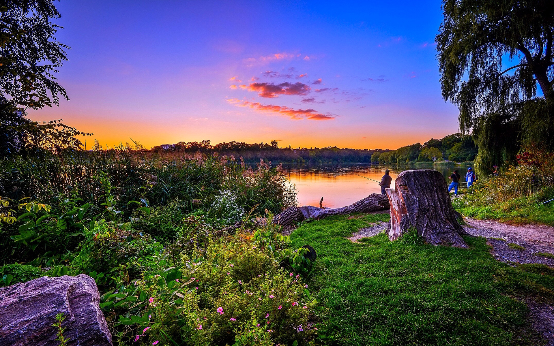 Берег озера в траве  № 2482712 без смс
