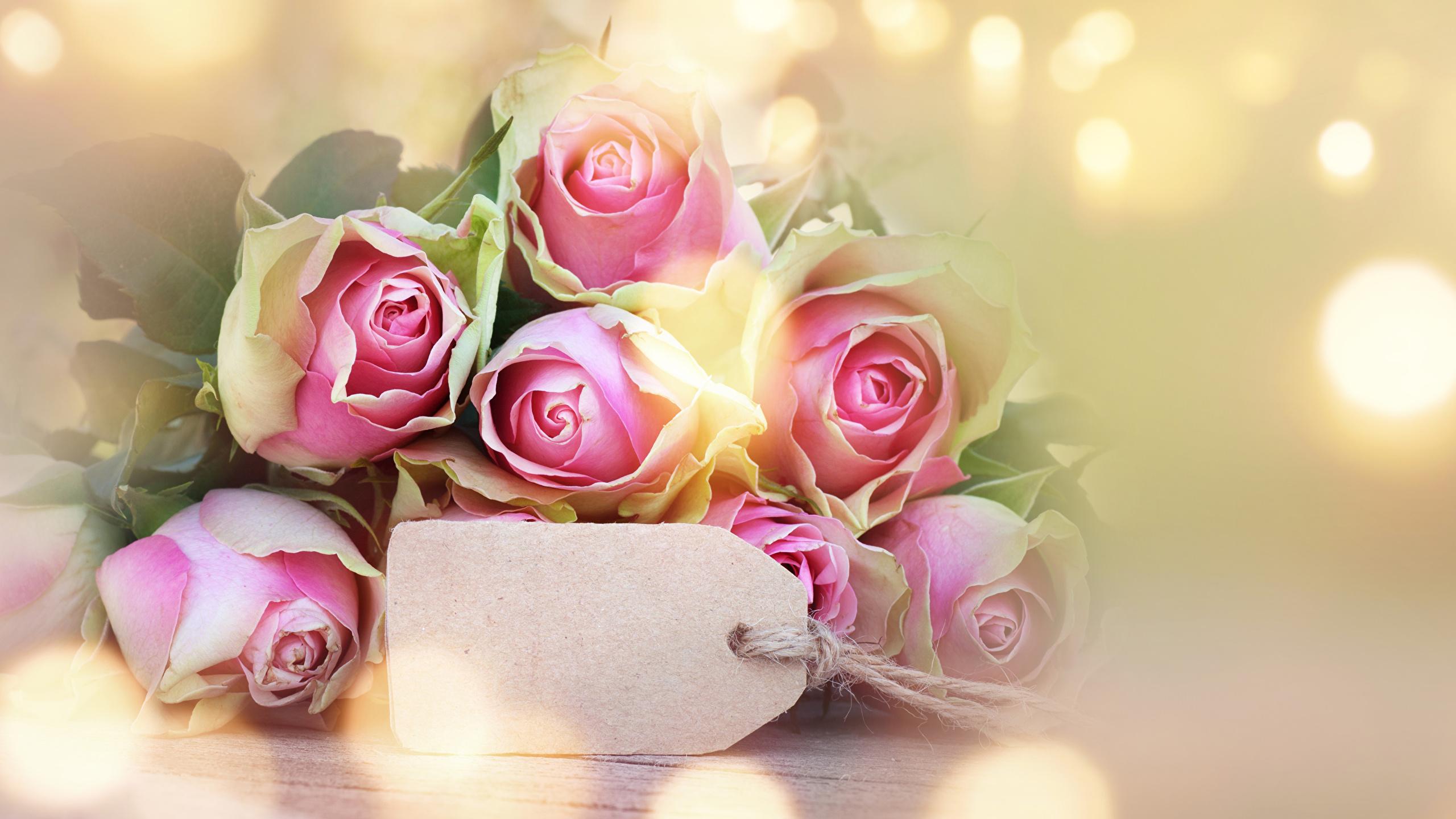 Фото цветов розы на открытку 13