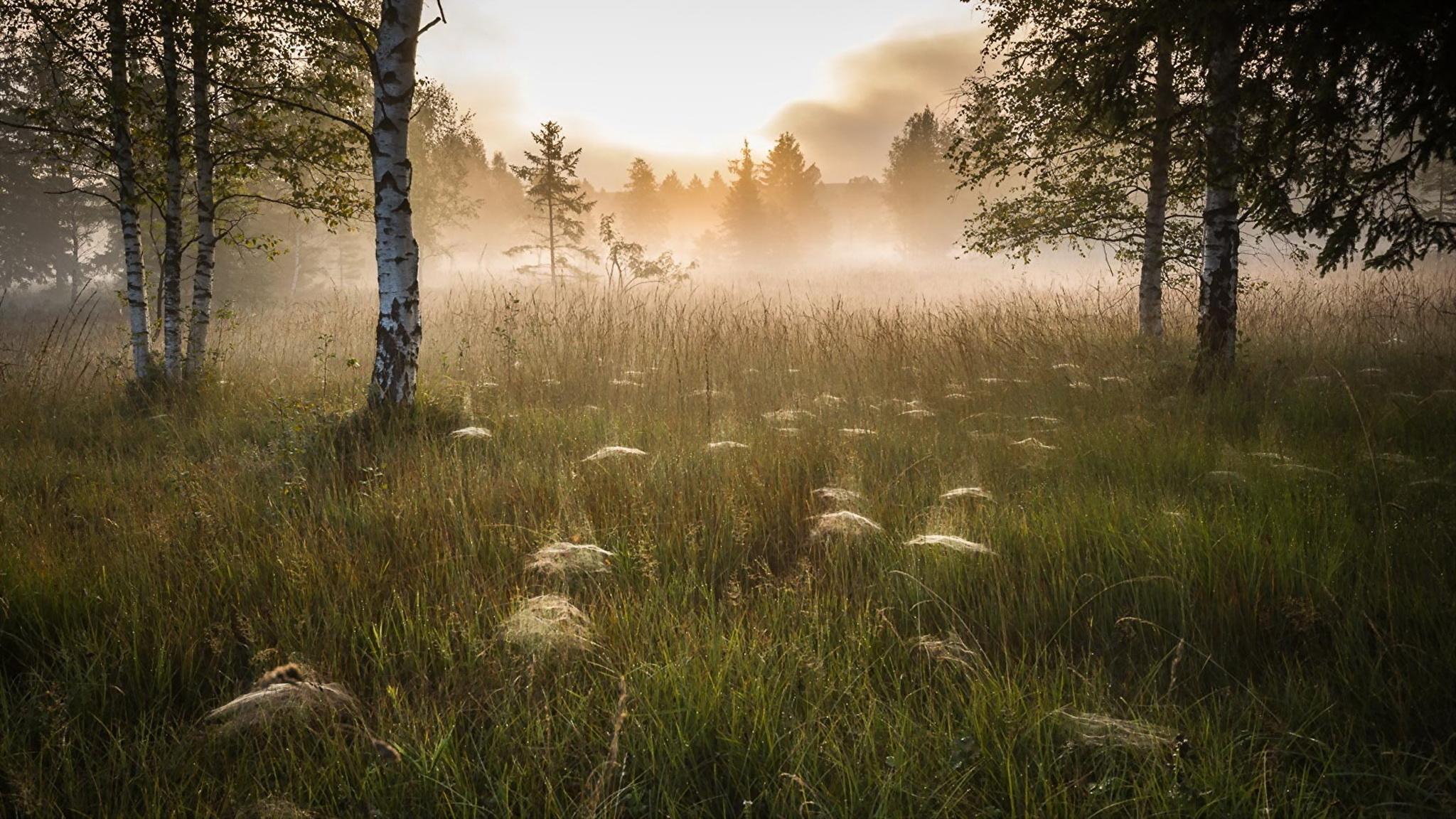природа березы трава деревья закат nature birch grass trees sunset  № 1278499  скачать