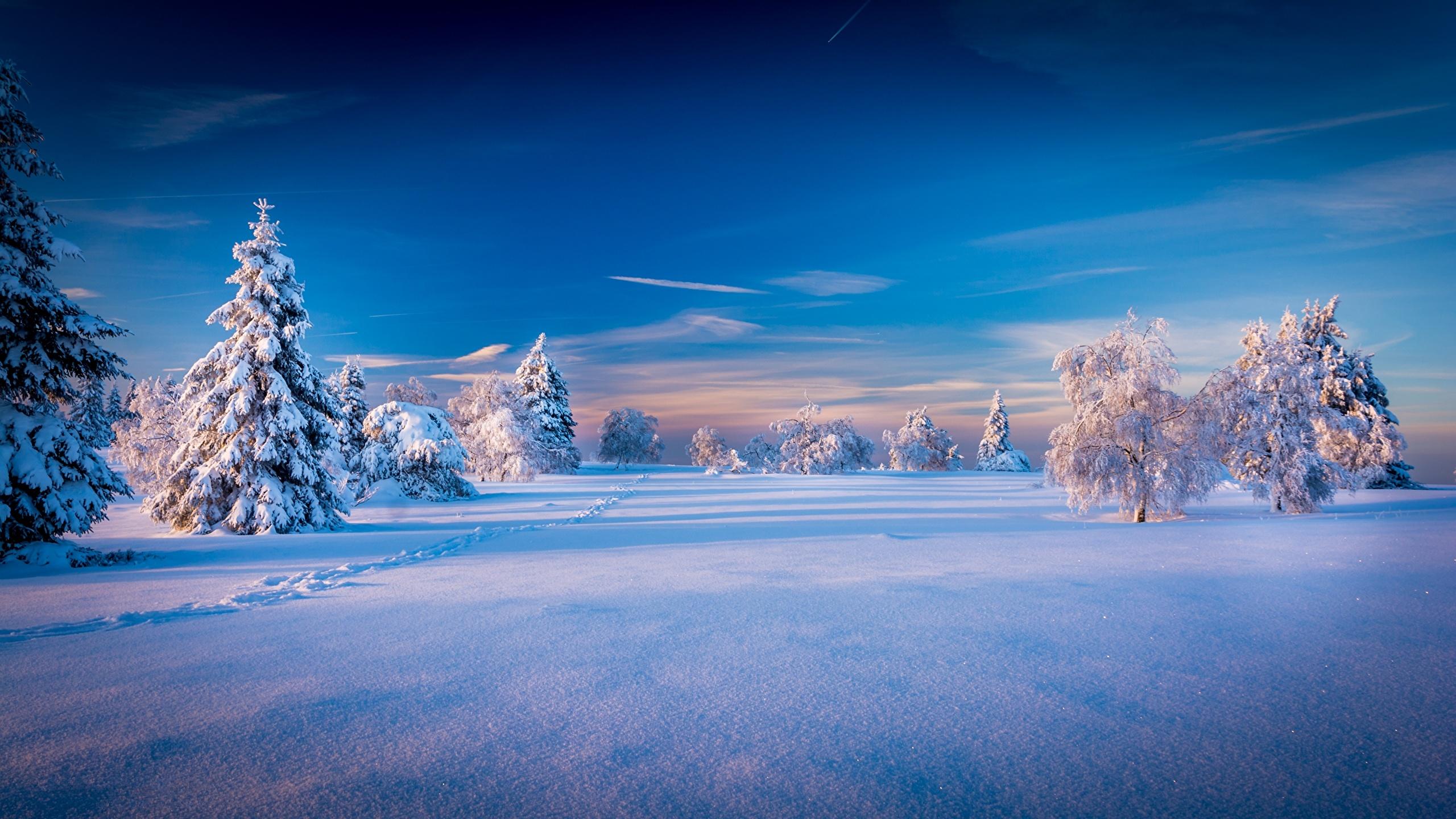 природа деревья ели зима снег небо  № 2803241 без смс