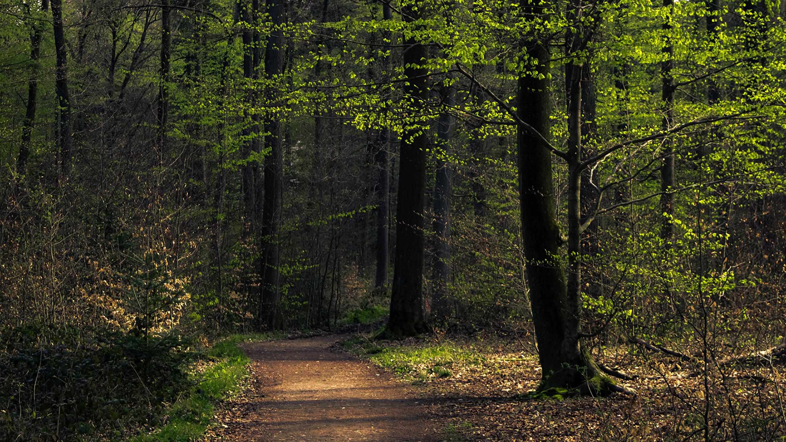 природа деревья лес тропа  № 1206312 без смс