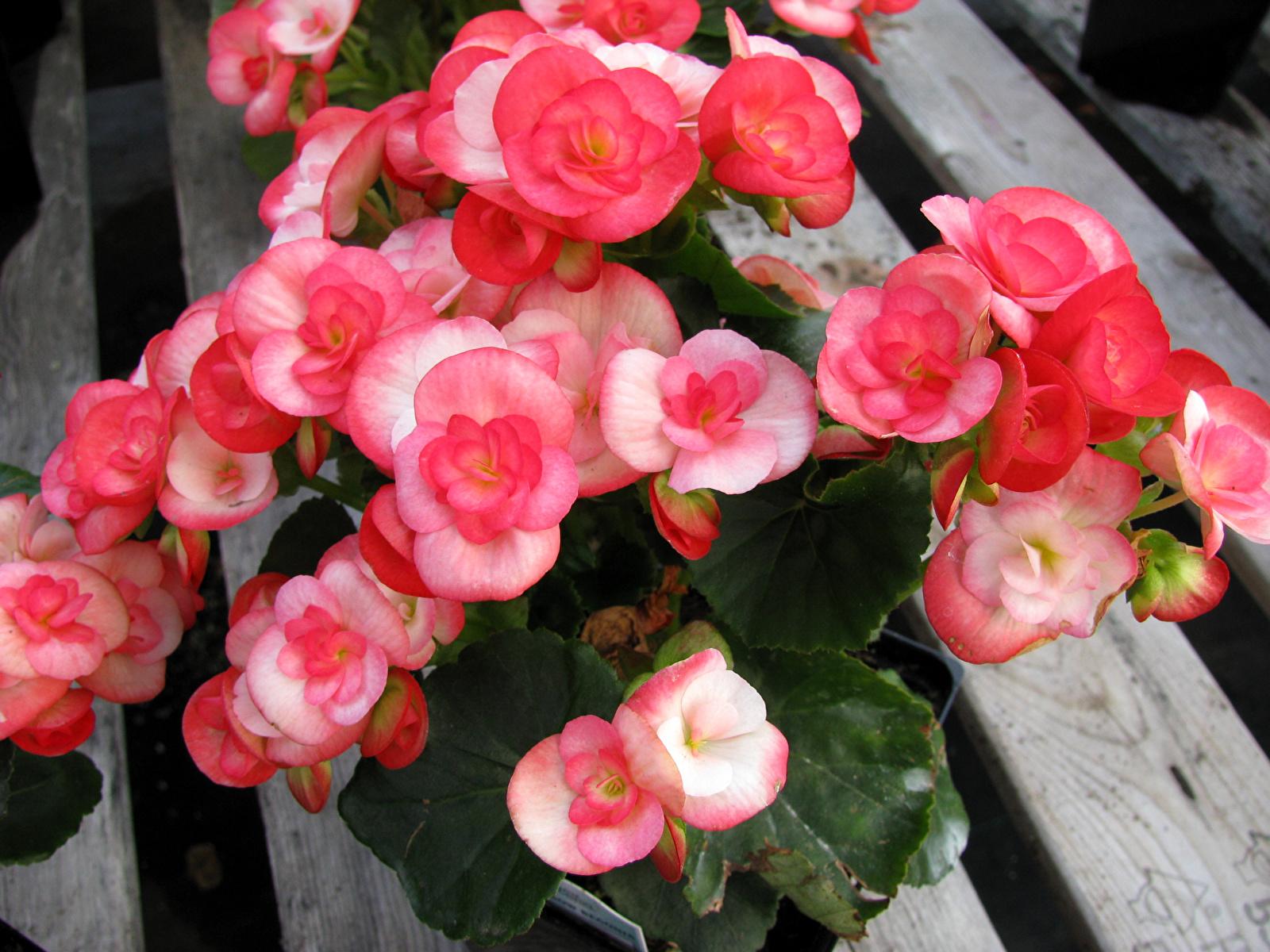 Цветы цветущие круглый год фото