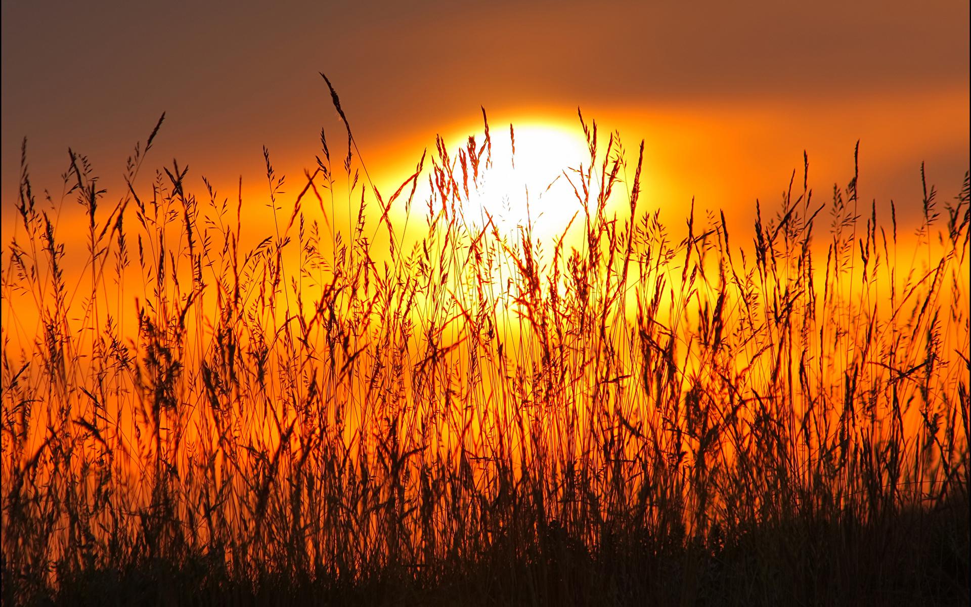 закат небо полевые растения  № 963469 без смс
