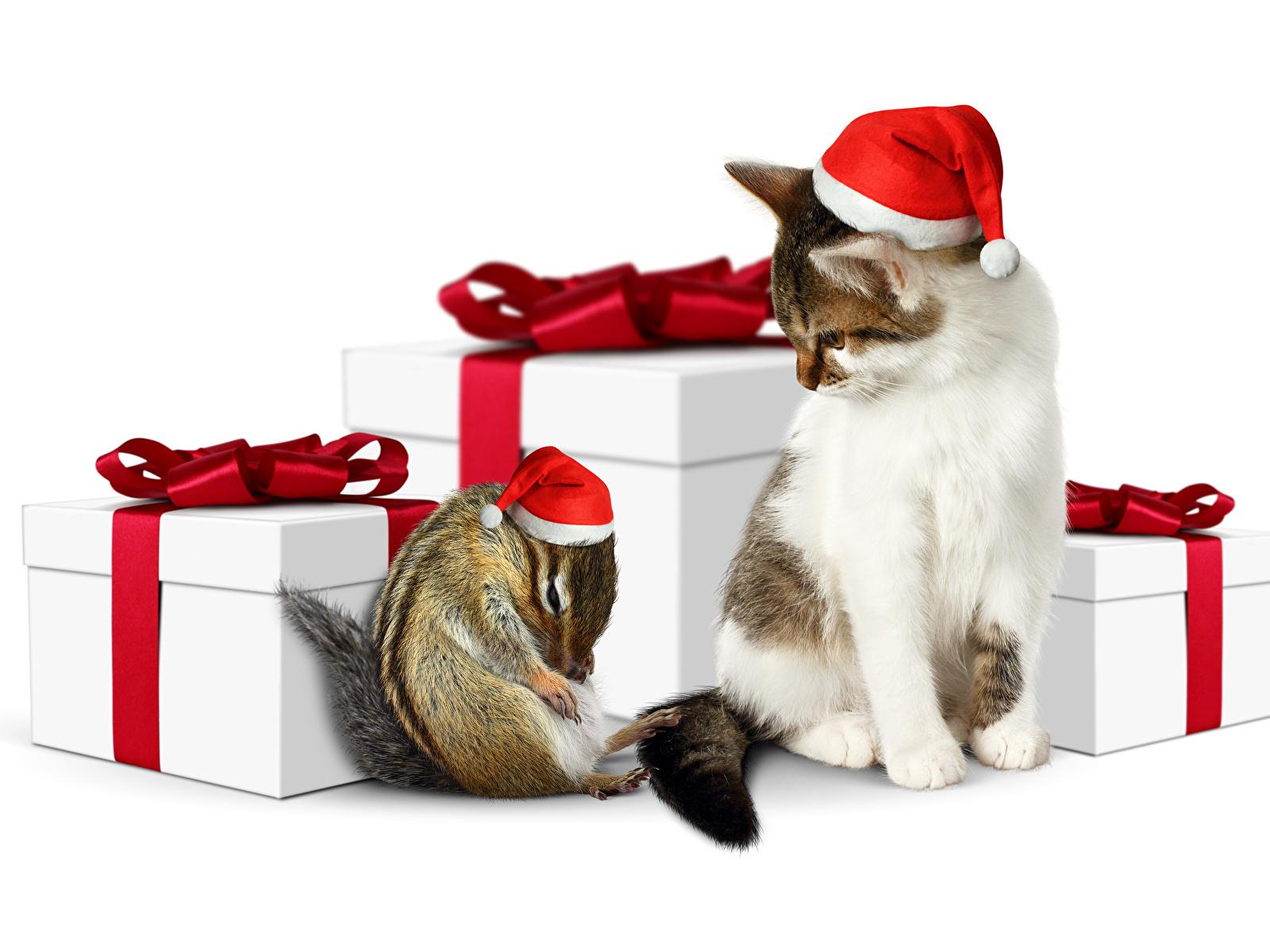 В подарок животное 21