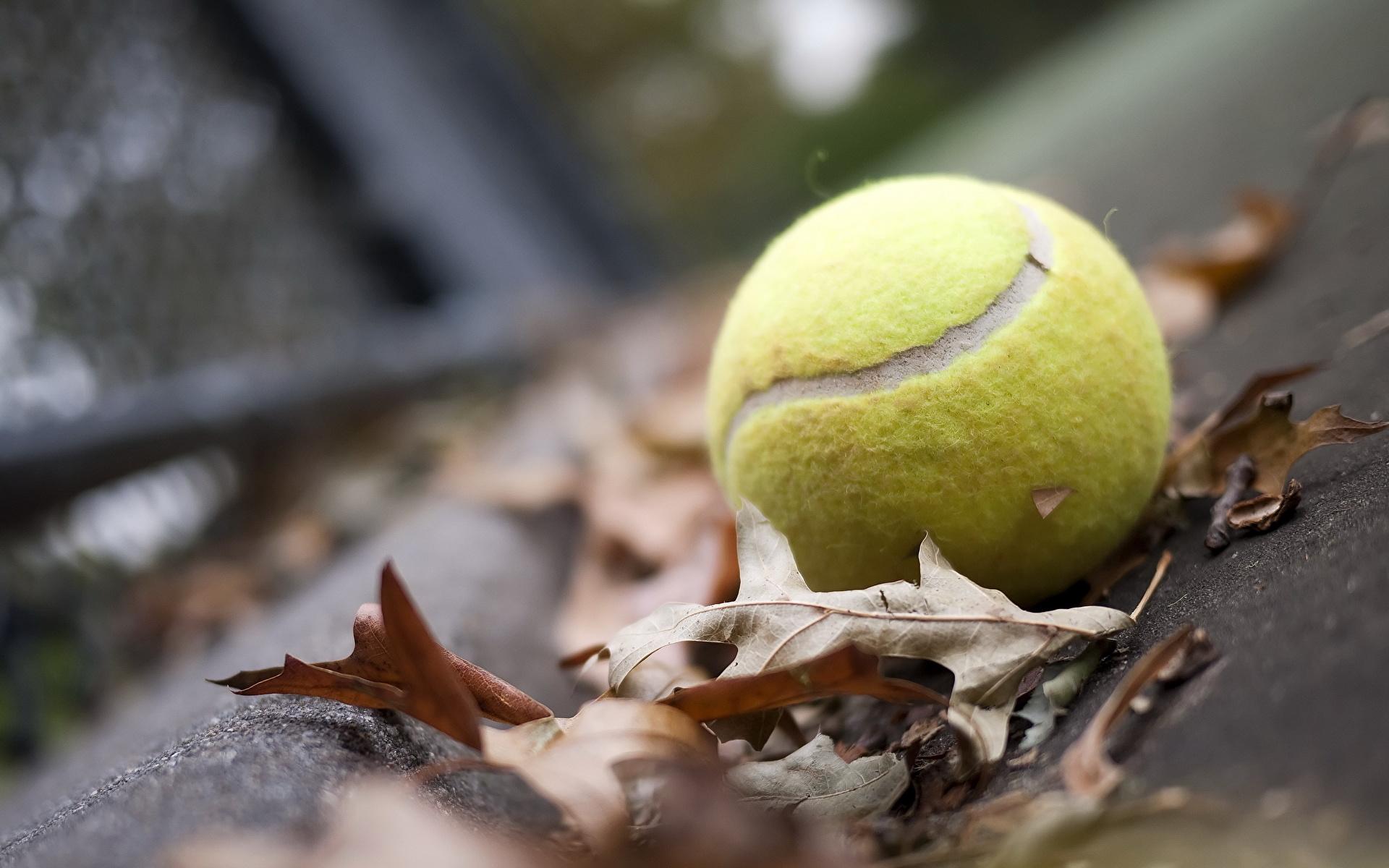 теннисный мяч  № 1367188 без смс