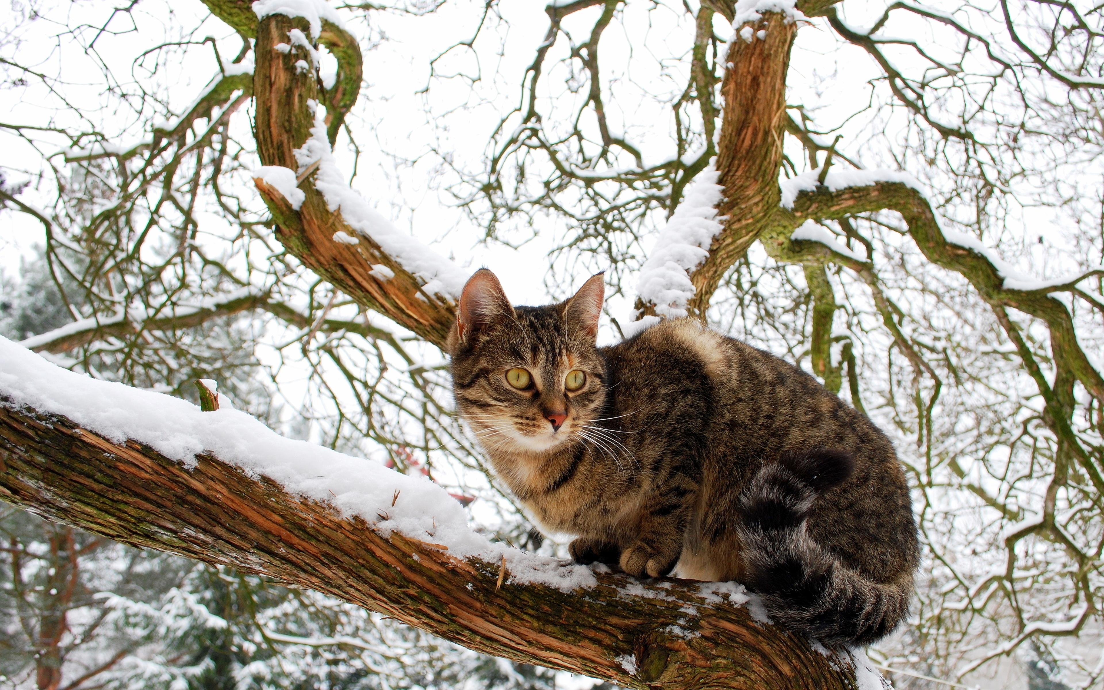 Кот на ветке  № 1118465 загрузить