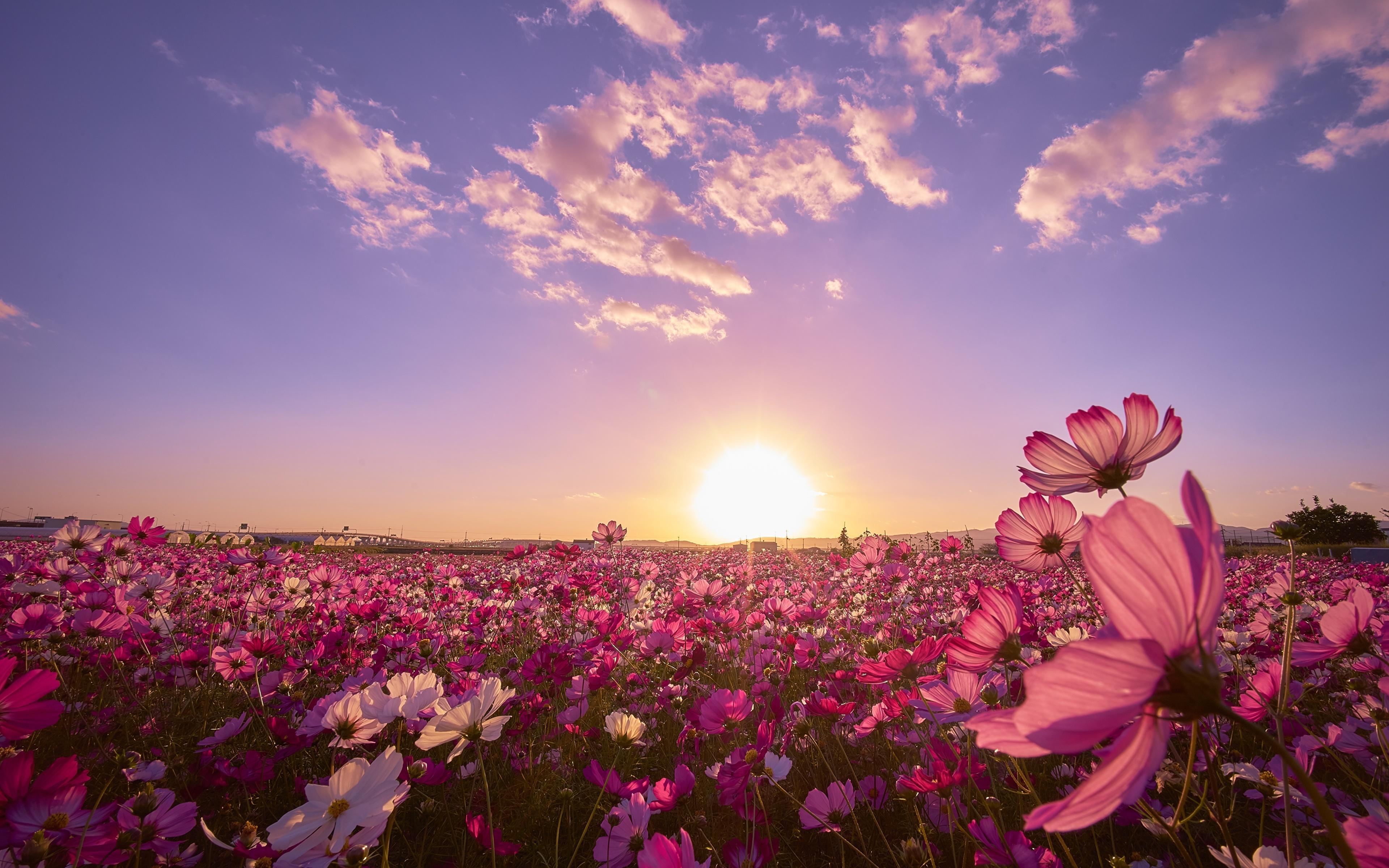 природа цветы трава мельниц восход солнце  № 2556635 без смс