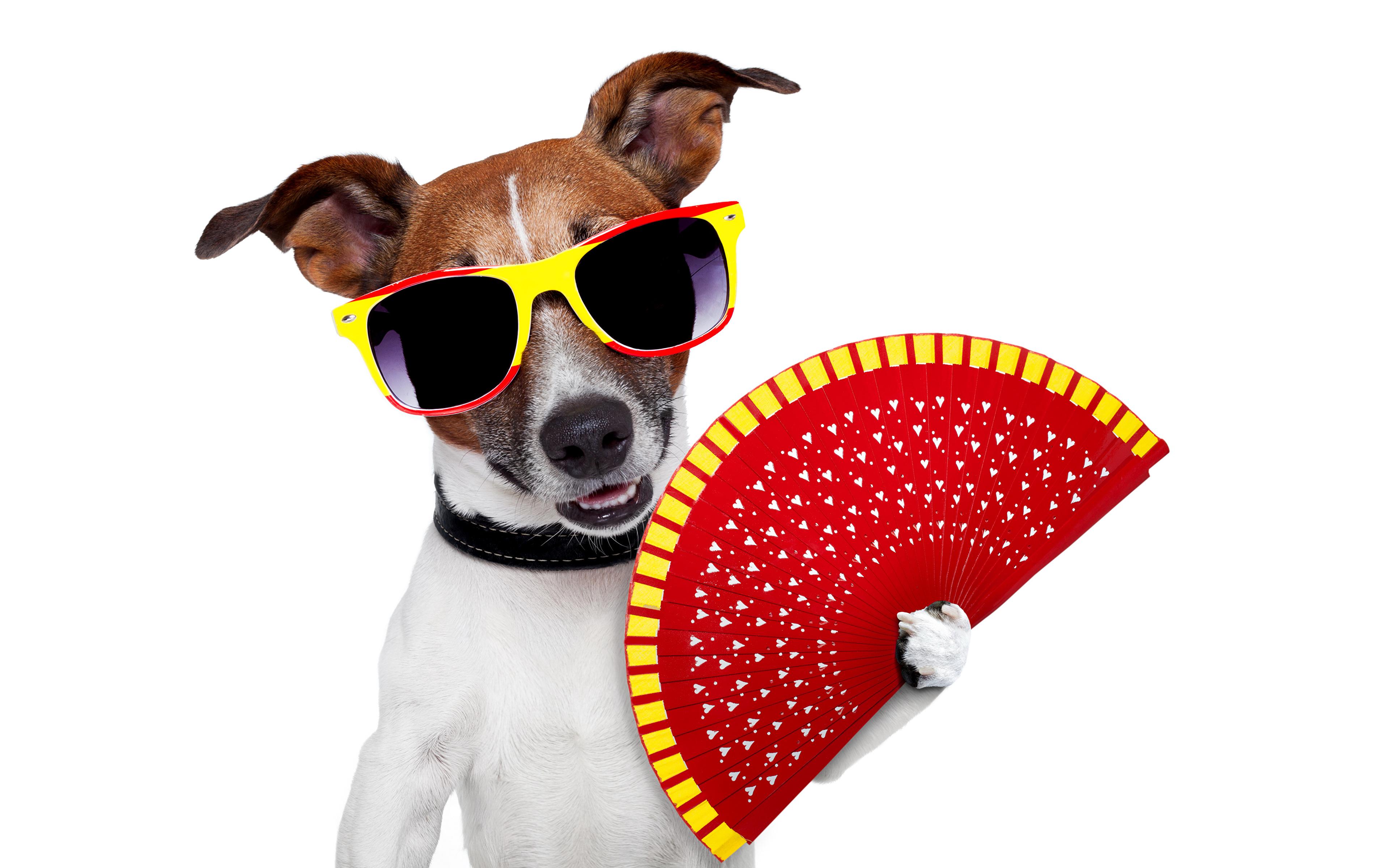 Певец собака юмор очки  № 1527418 бесплатно