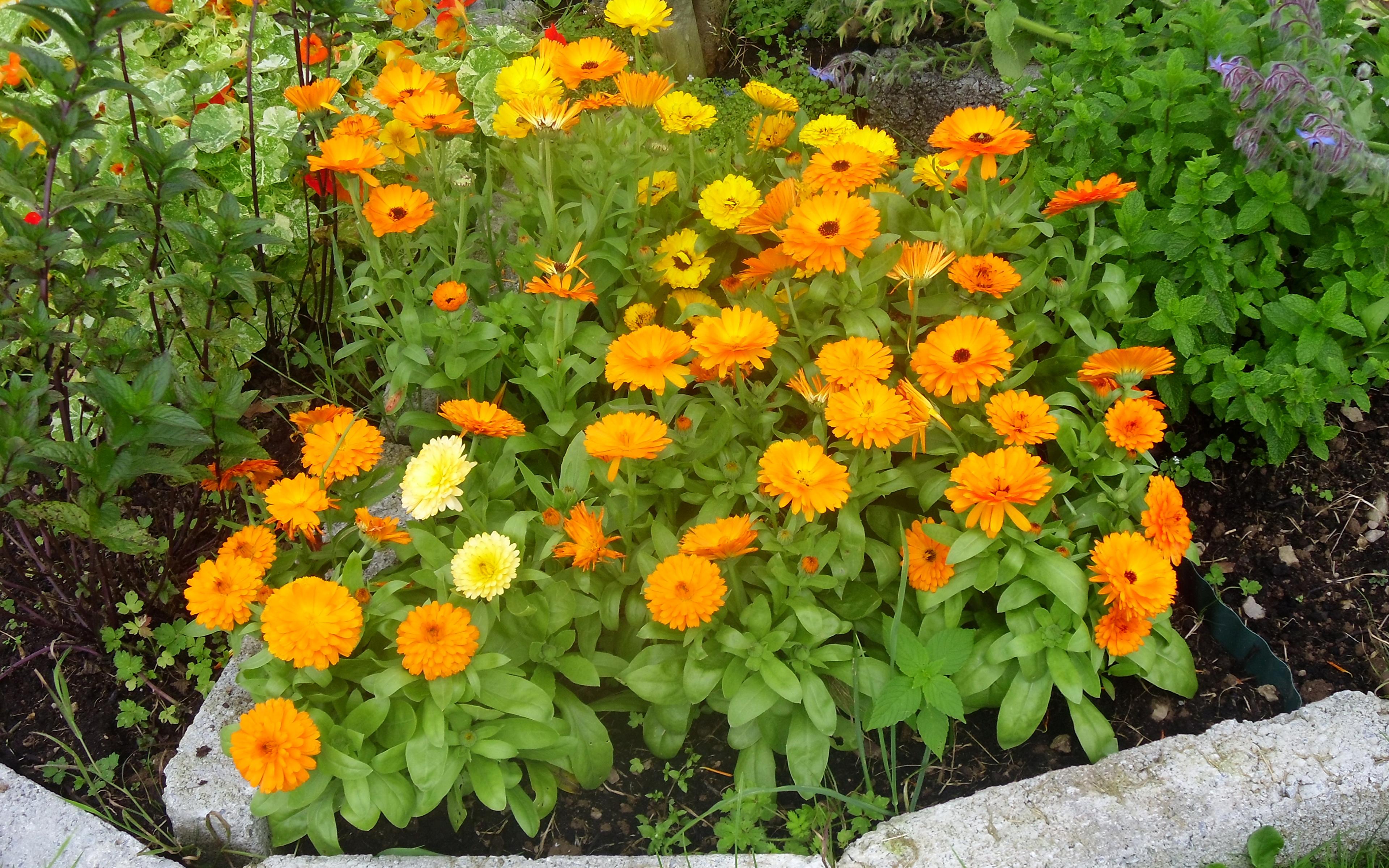 Комнатные растения: фото с названиями. Фотографии 31
