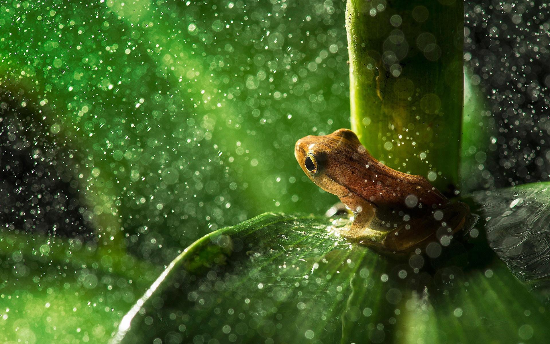природа цветы животное лягушка  № 3068657  скачать