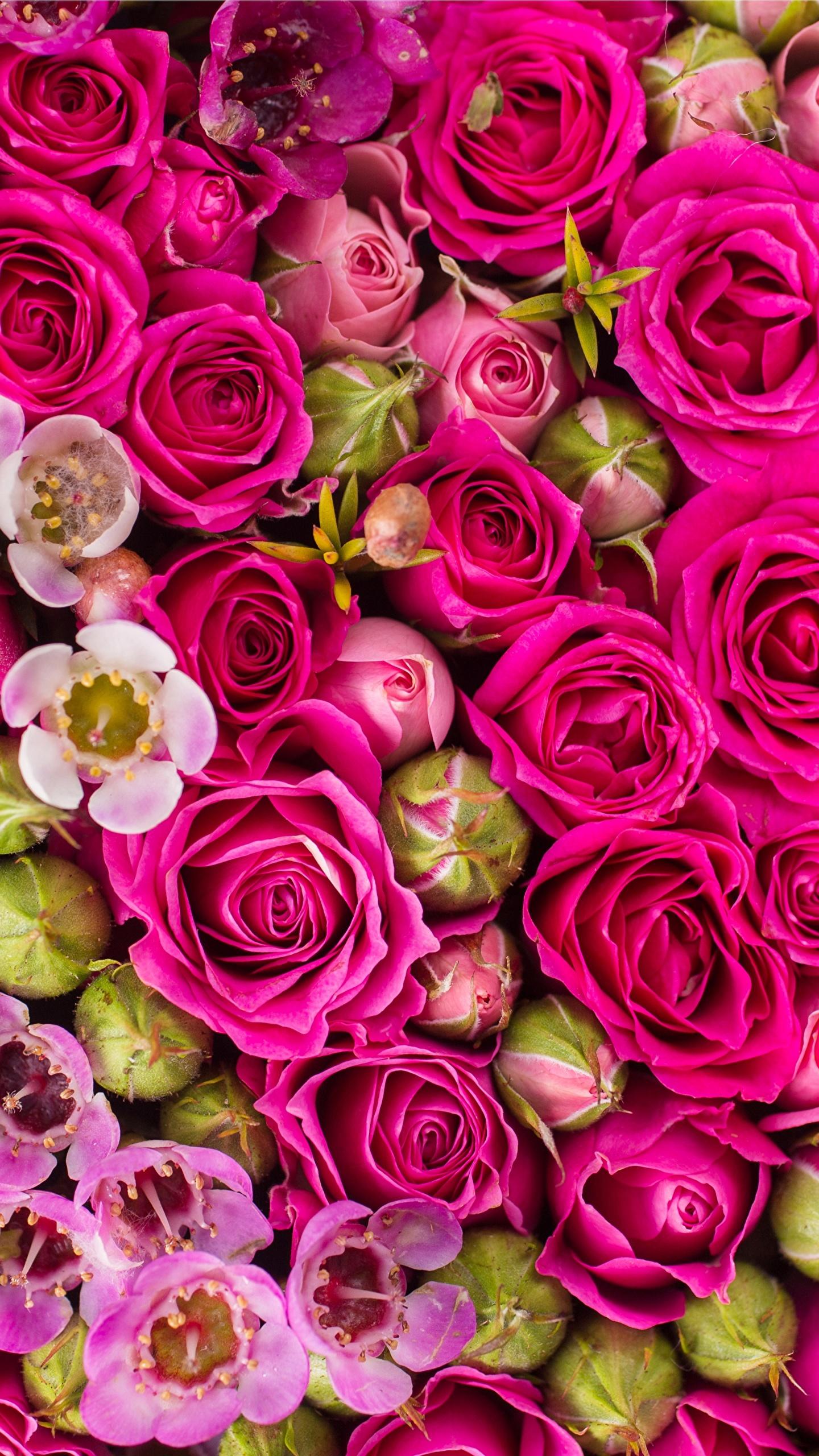 Красивый цветок фото вертикально