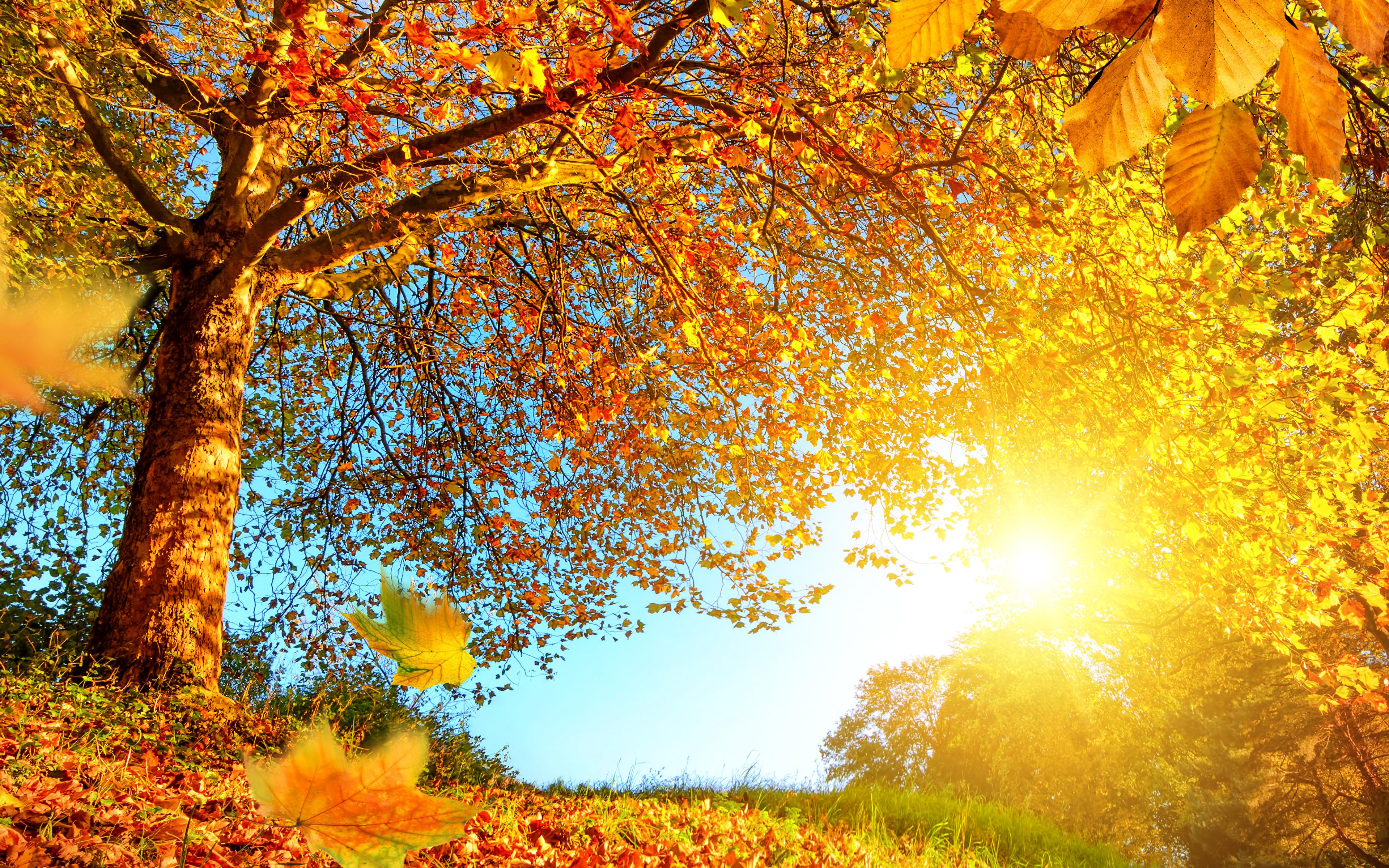 деревья листва осень солнце  № 3191735 без смс