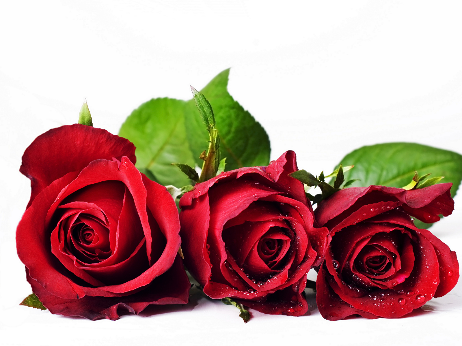 Открытки со словом роза