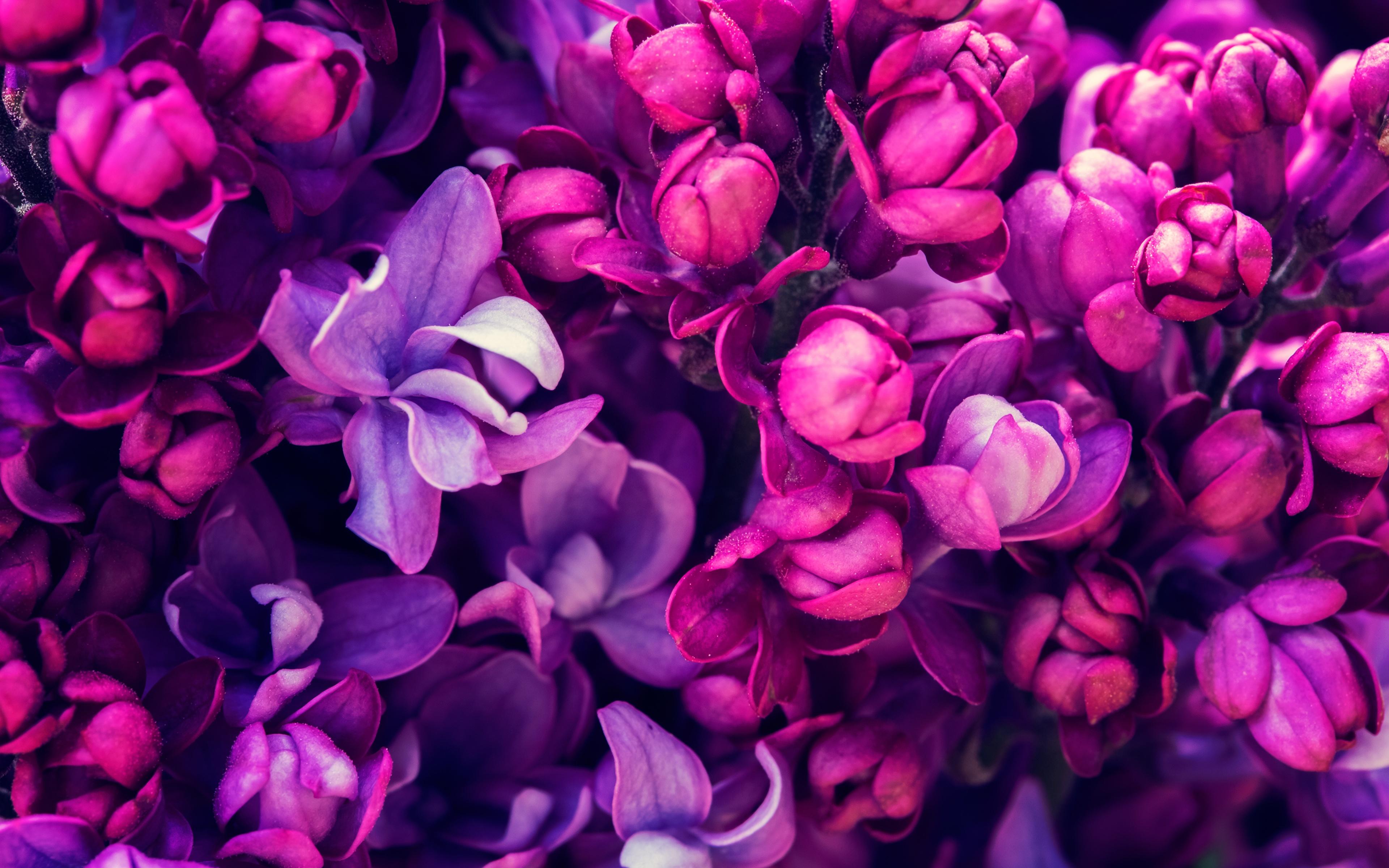 цветок фиолетовый  № 814187 загрузить