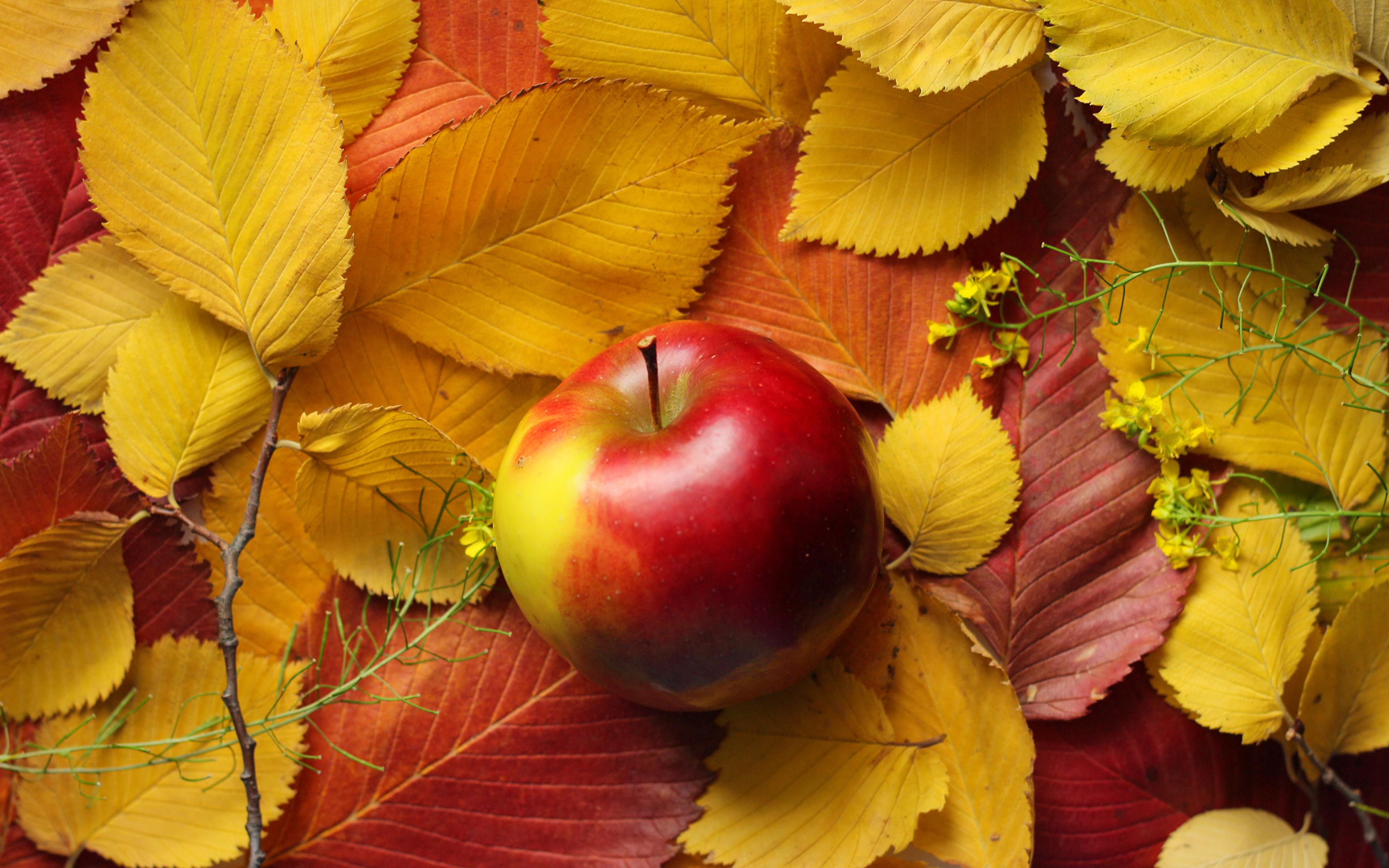 Осенние листья на рабочий стол обои в высоком разрешении