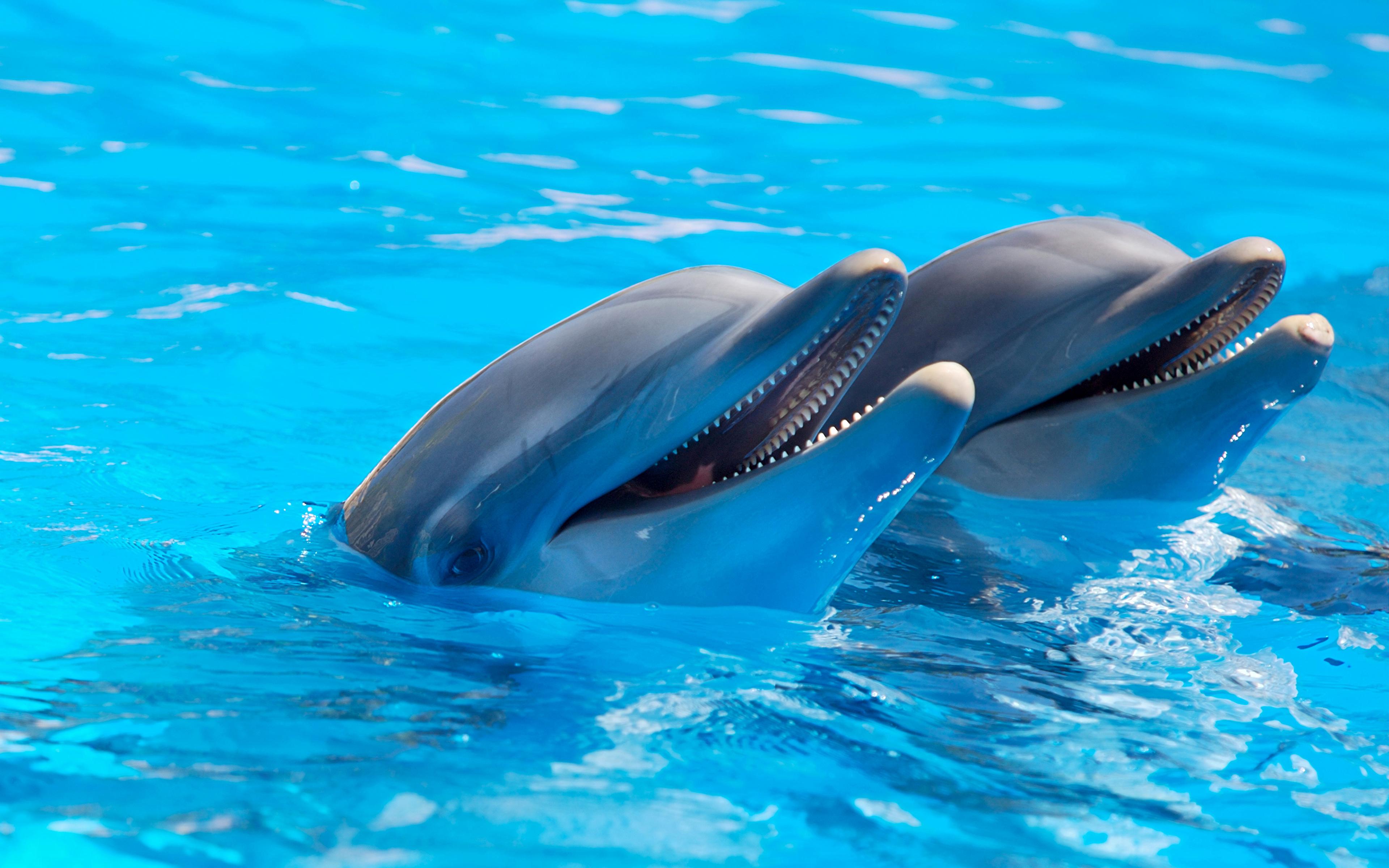 Обои для рабочего стола 1280х1024 высокого качества дельфины
