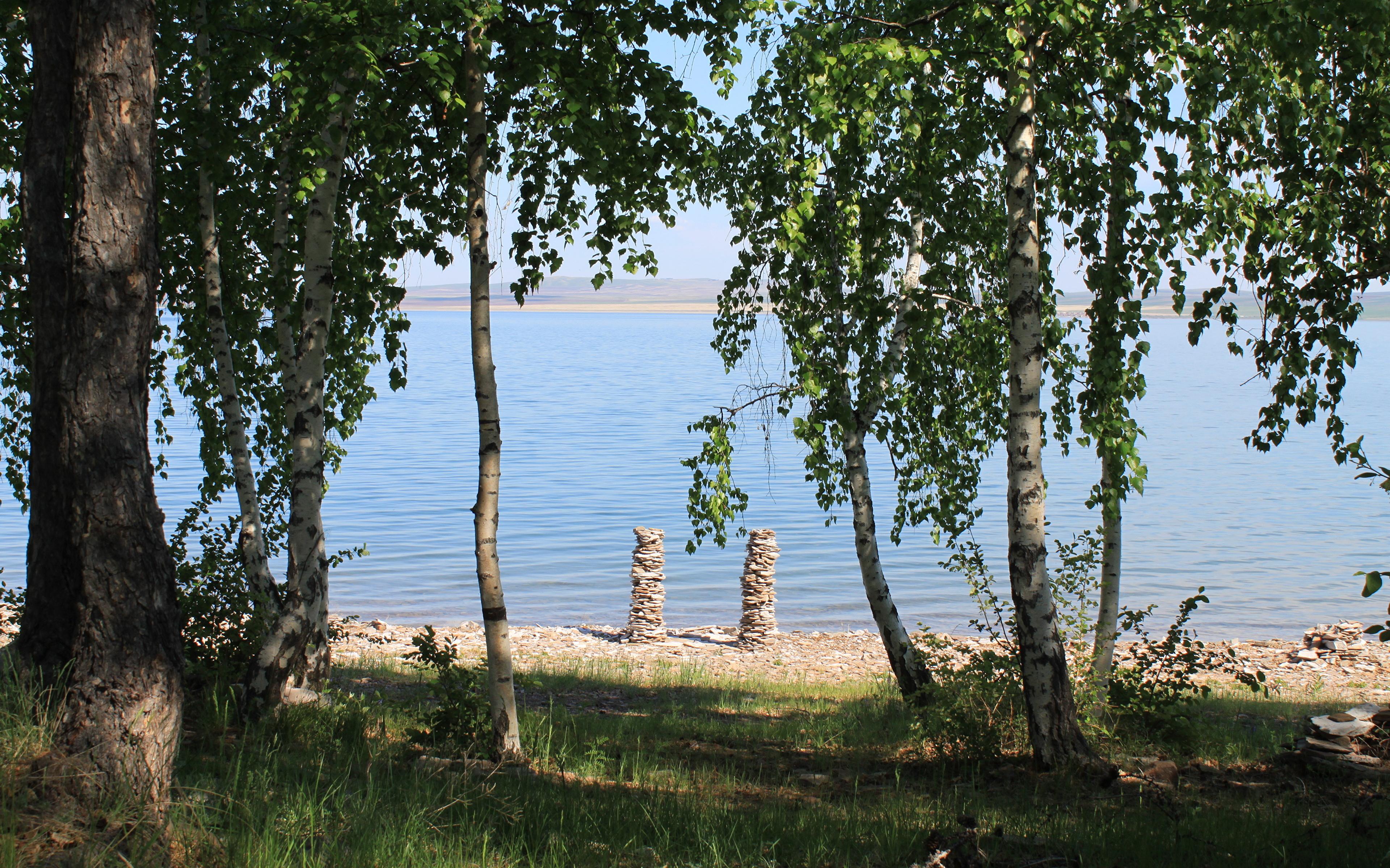 березы берег озеро  № 1195401 без смс