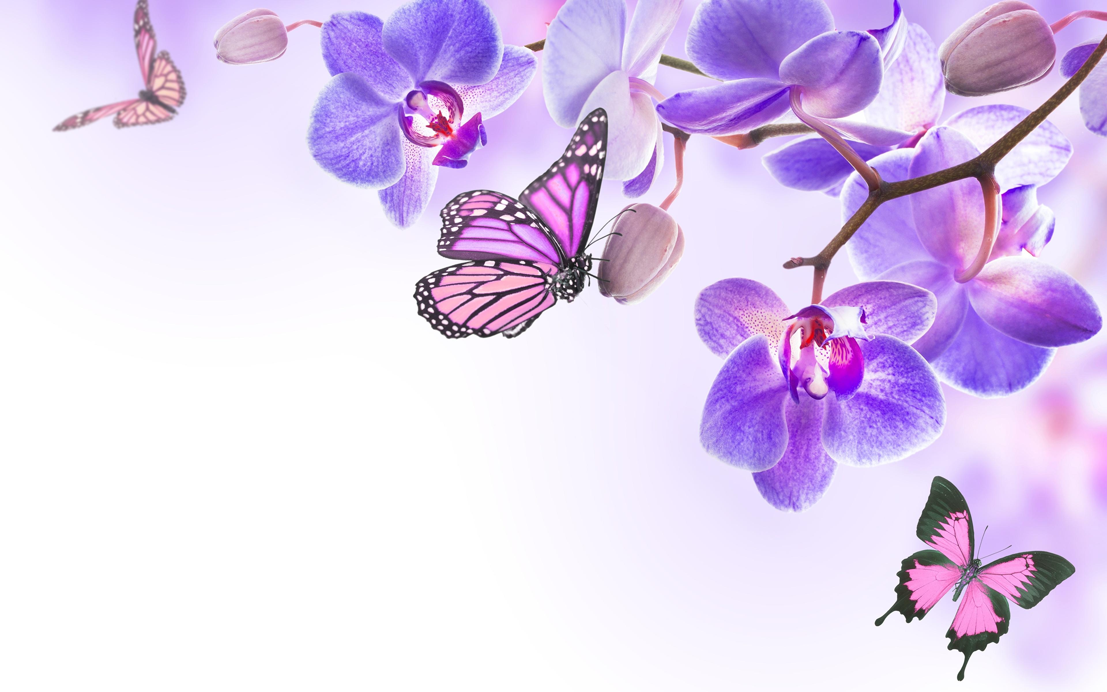 графика бабочки цветы вода graphics butterfly flowers water  № 1313536 бесплатно