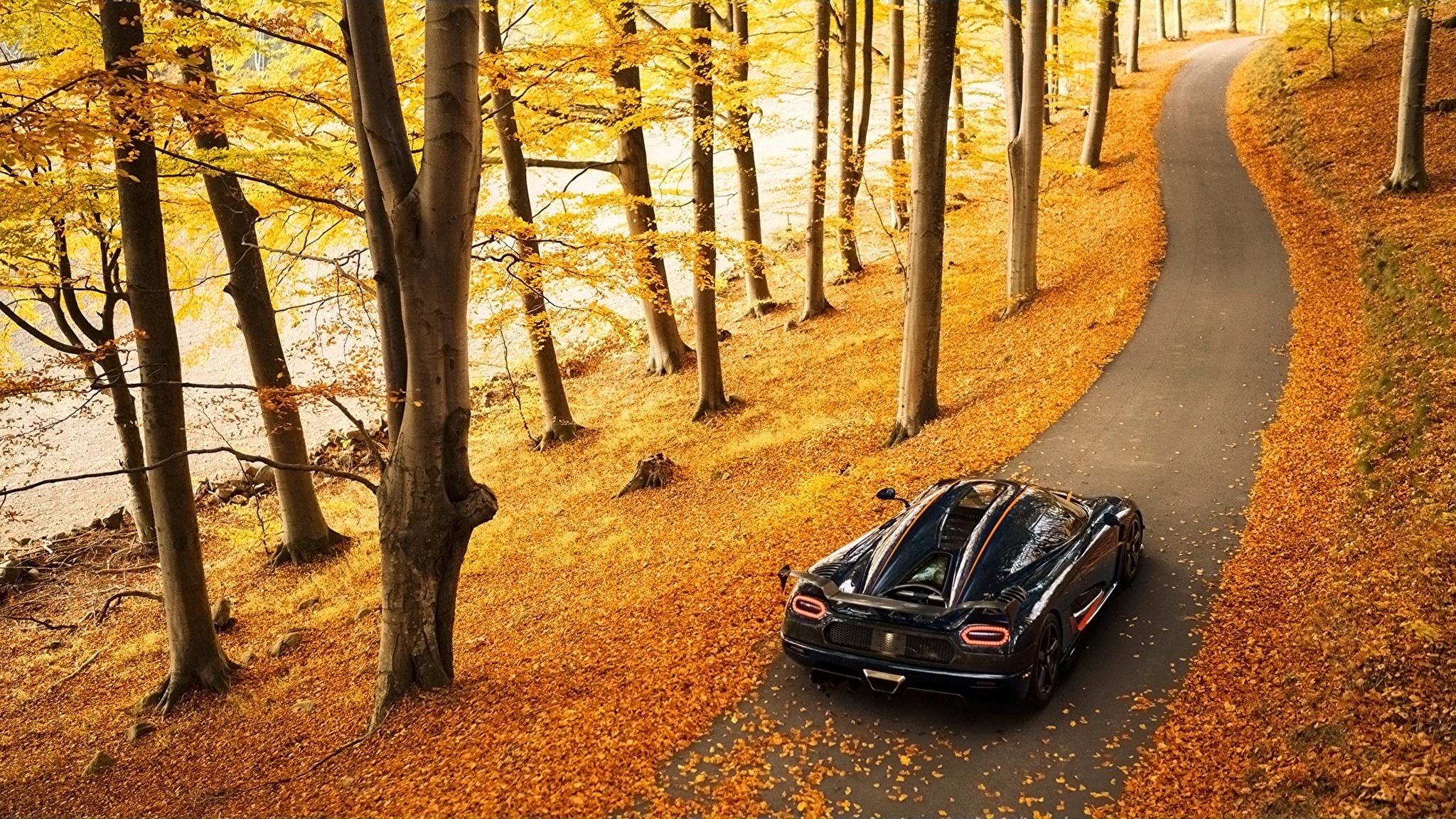 автомобиль осень лес дорога  № 3771460 без смс