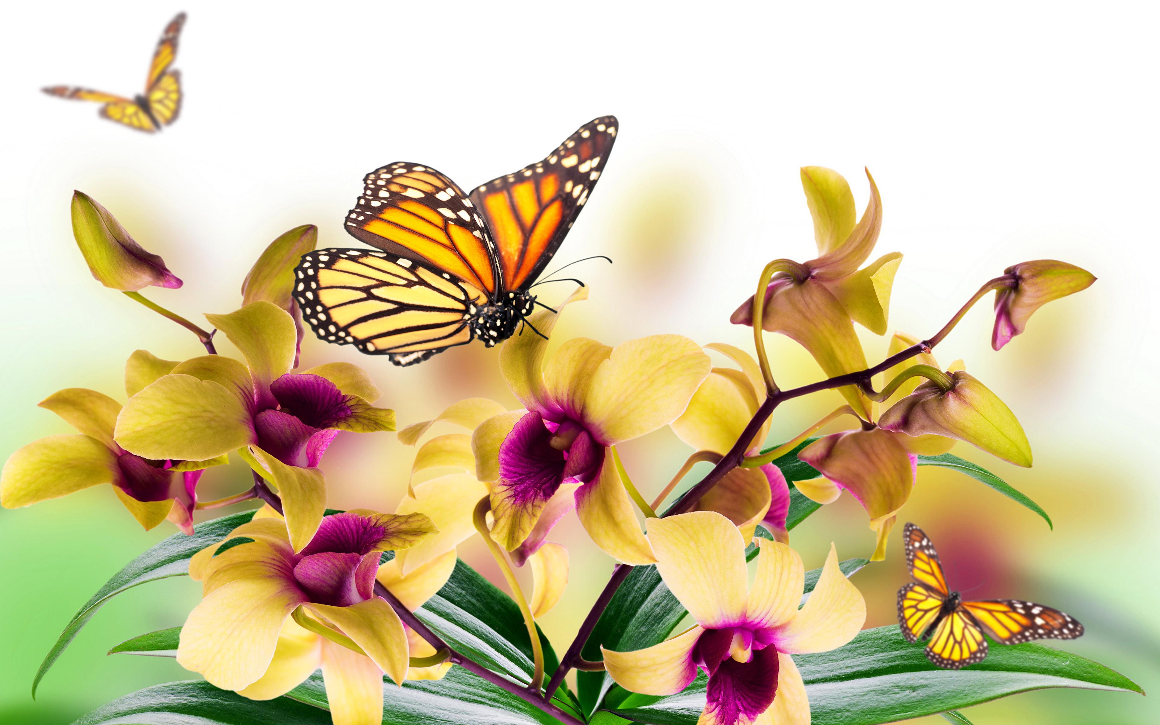 бабочки из лепестков  № 2303788 загрузить