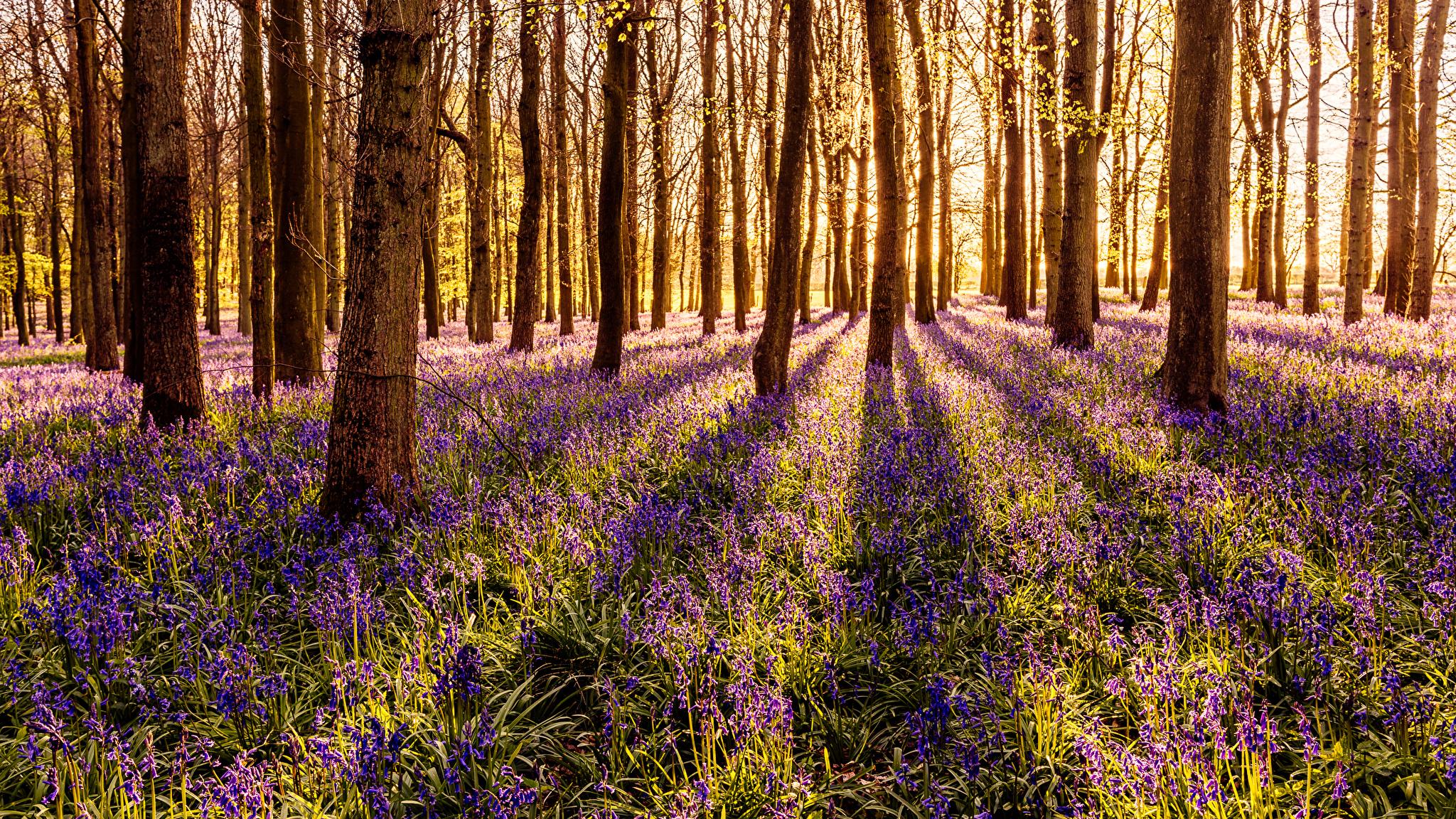 весной в лесу  № 113843 бесплатно