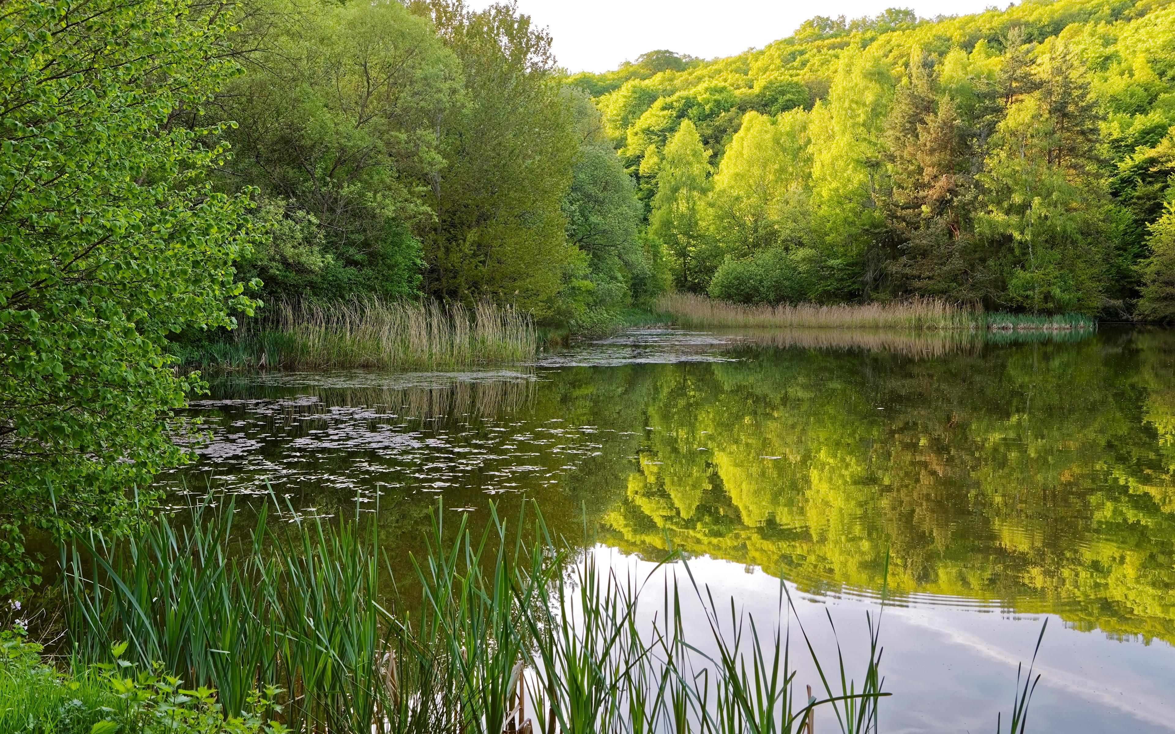 Берег озера в траве  № 2482630 бесплатно