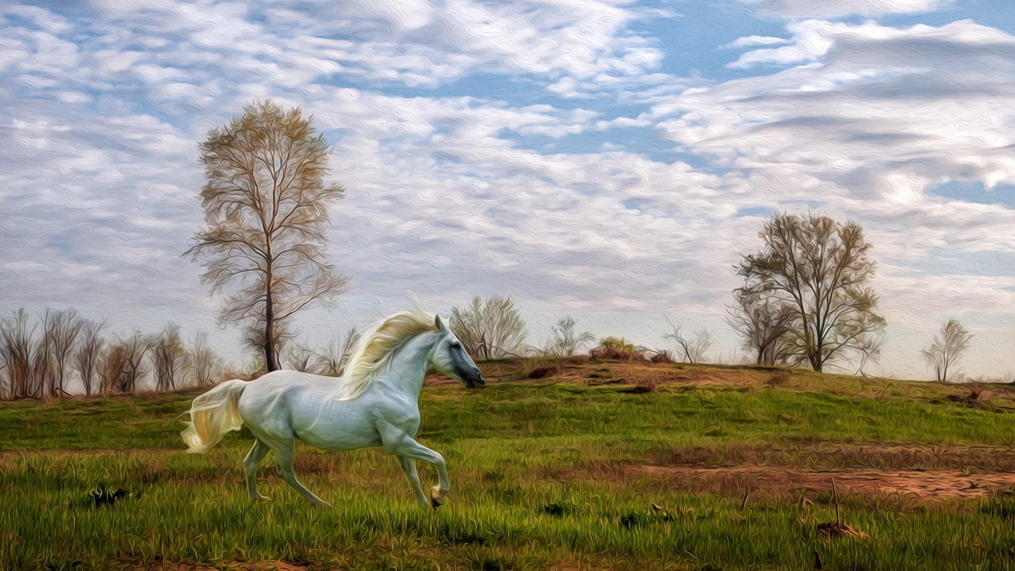 лошадь конь лес поляна  № 99122 бесплатно