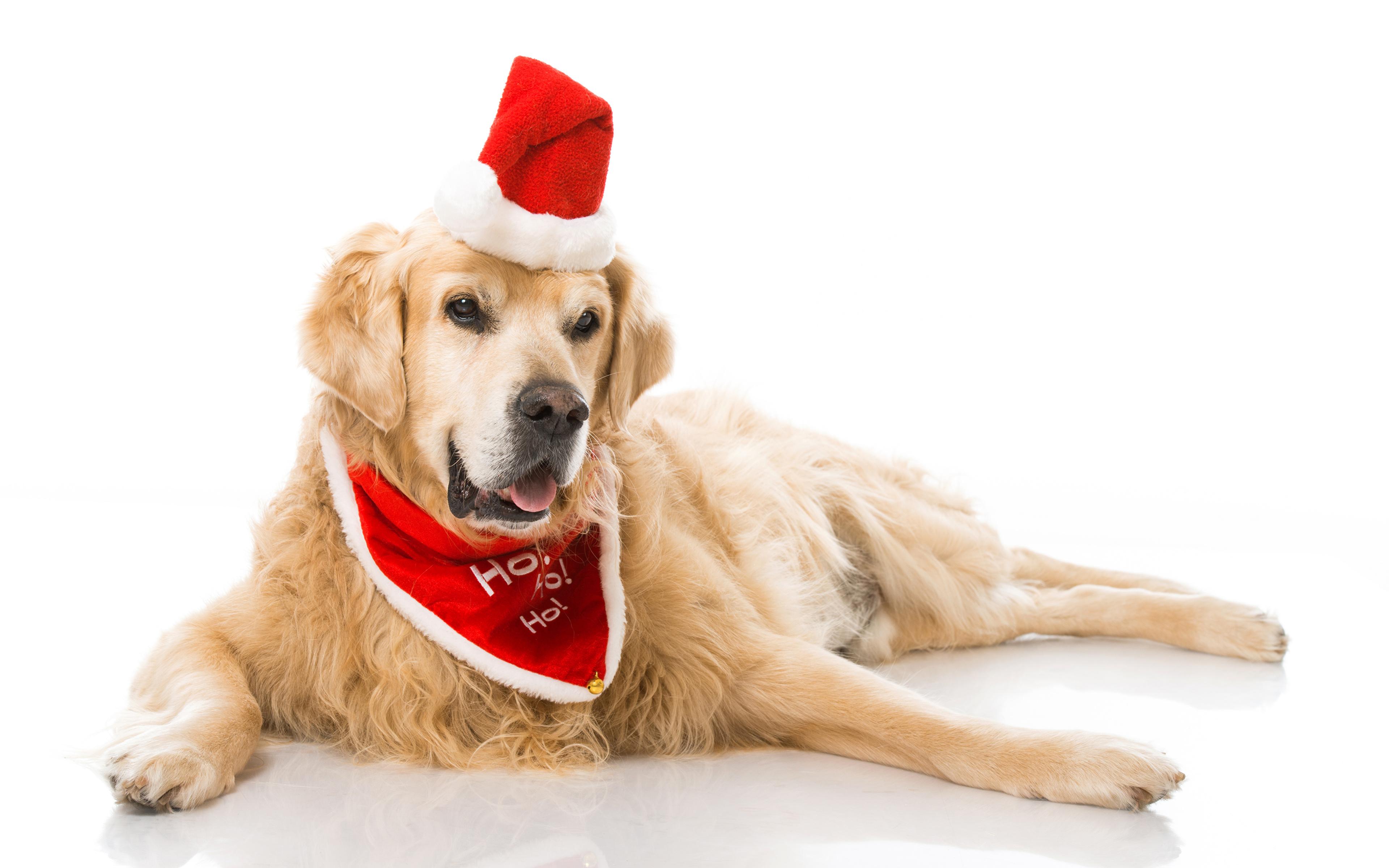 собачка в новогодней шапочке  № 1301966  скачать