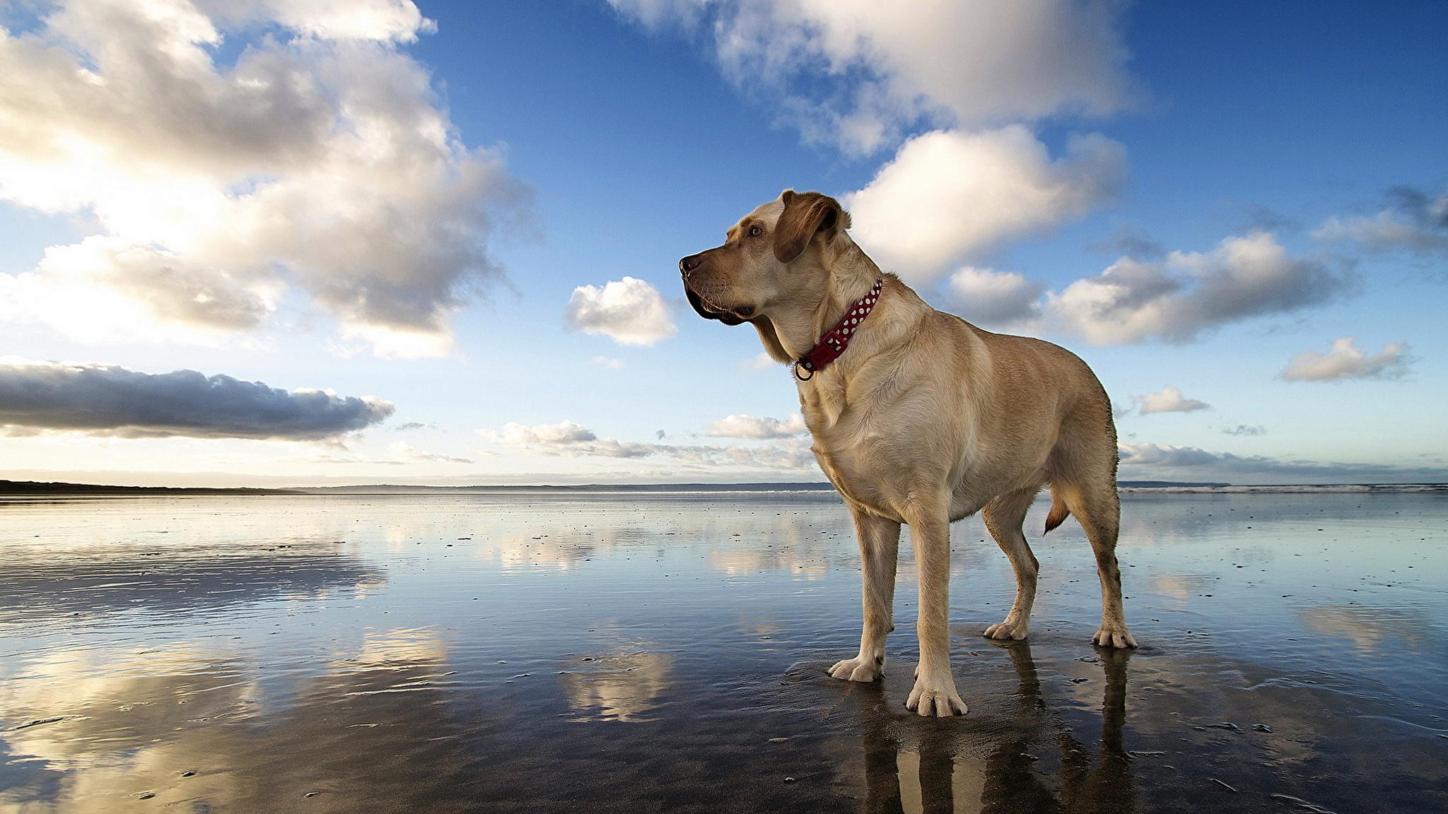 собака песок вода животное природа  № 956855 бесплатно