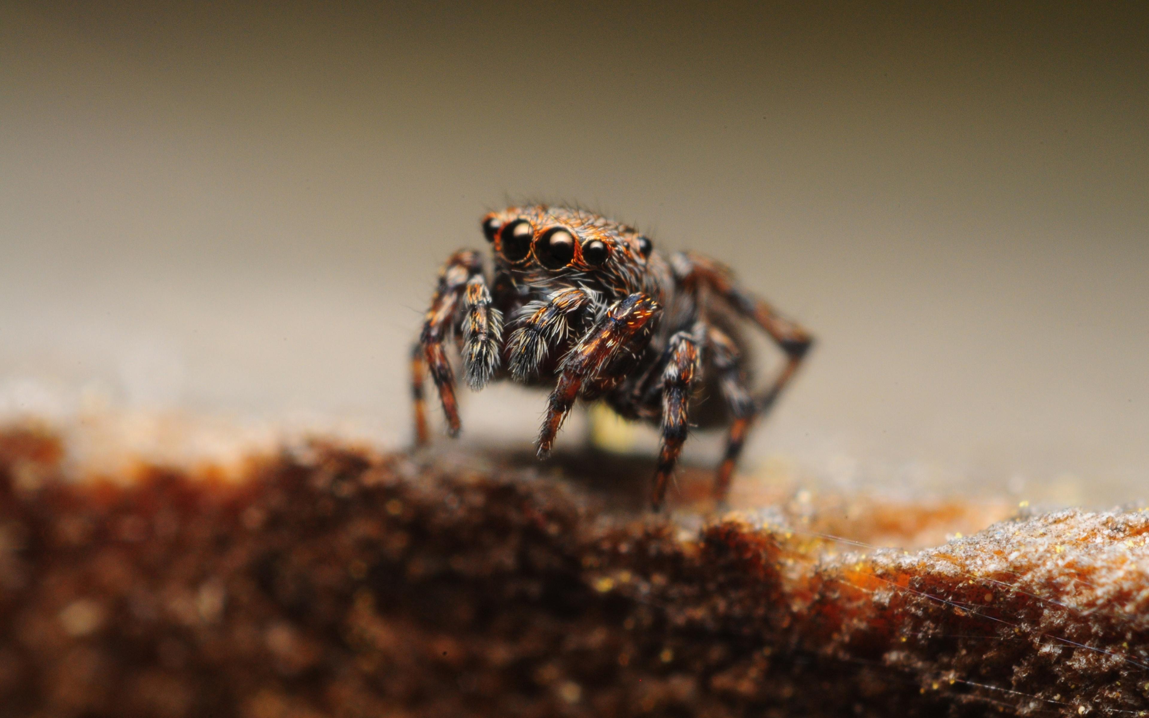 природа животные паук  № 2544238 без смс