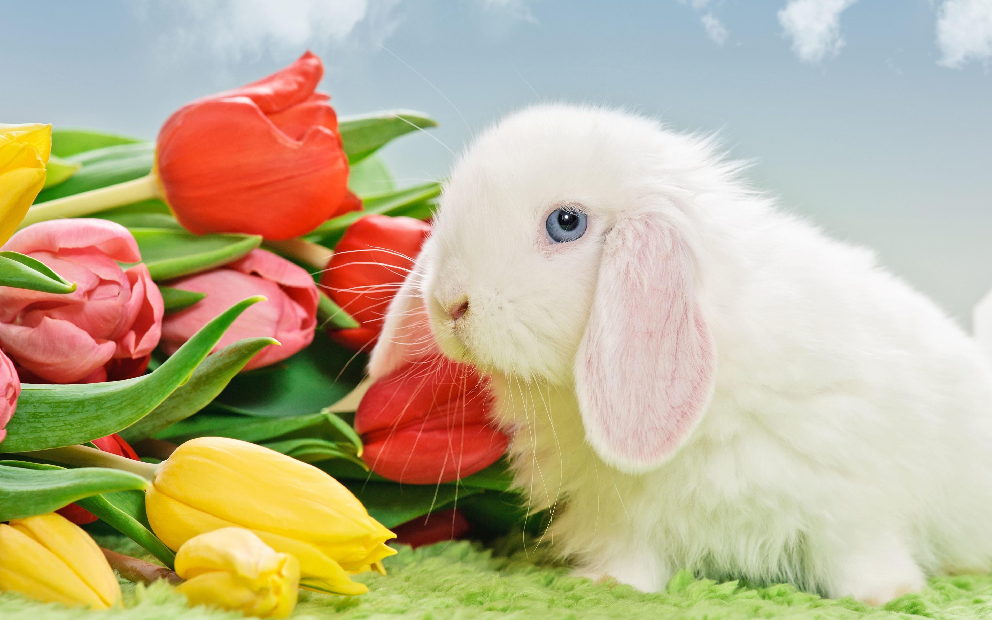 природа кролик цветы тюльпаны яйца пасха  № 271722 загрузить