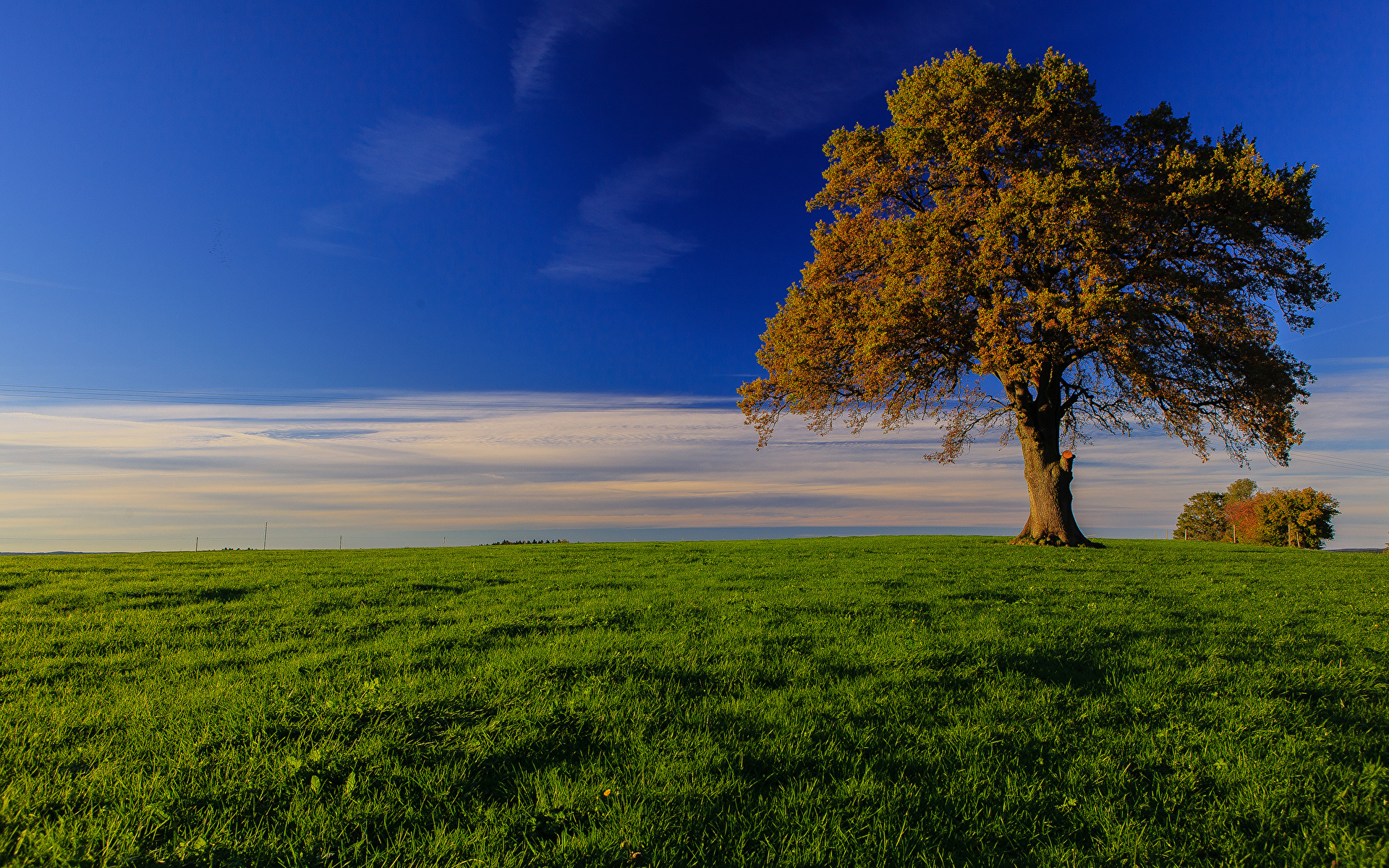 поле дерево  № 3020562 загрузить