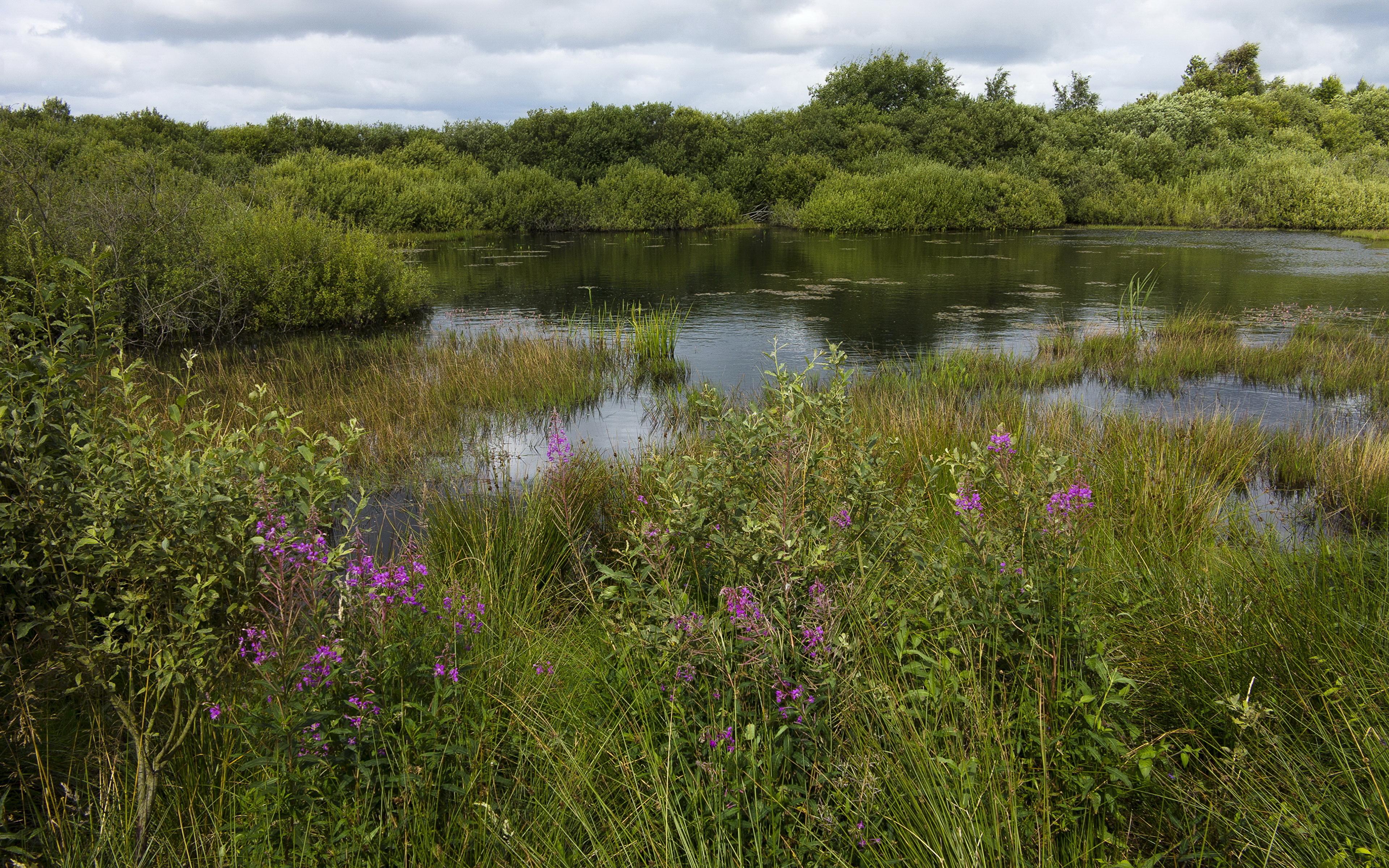 Берег озера в траве  № 2482680  скачать