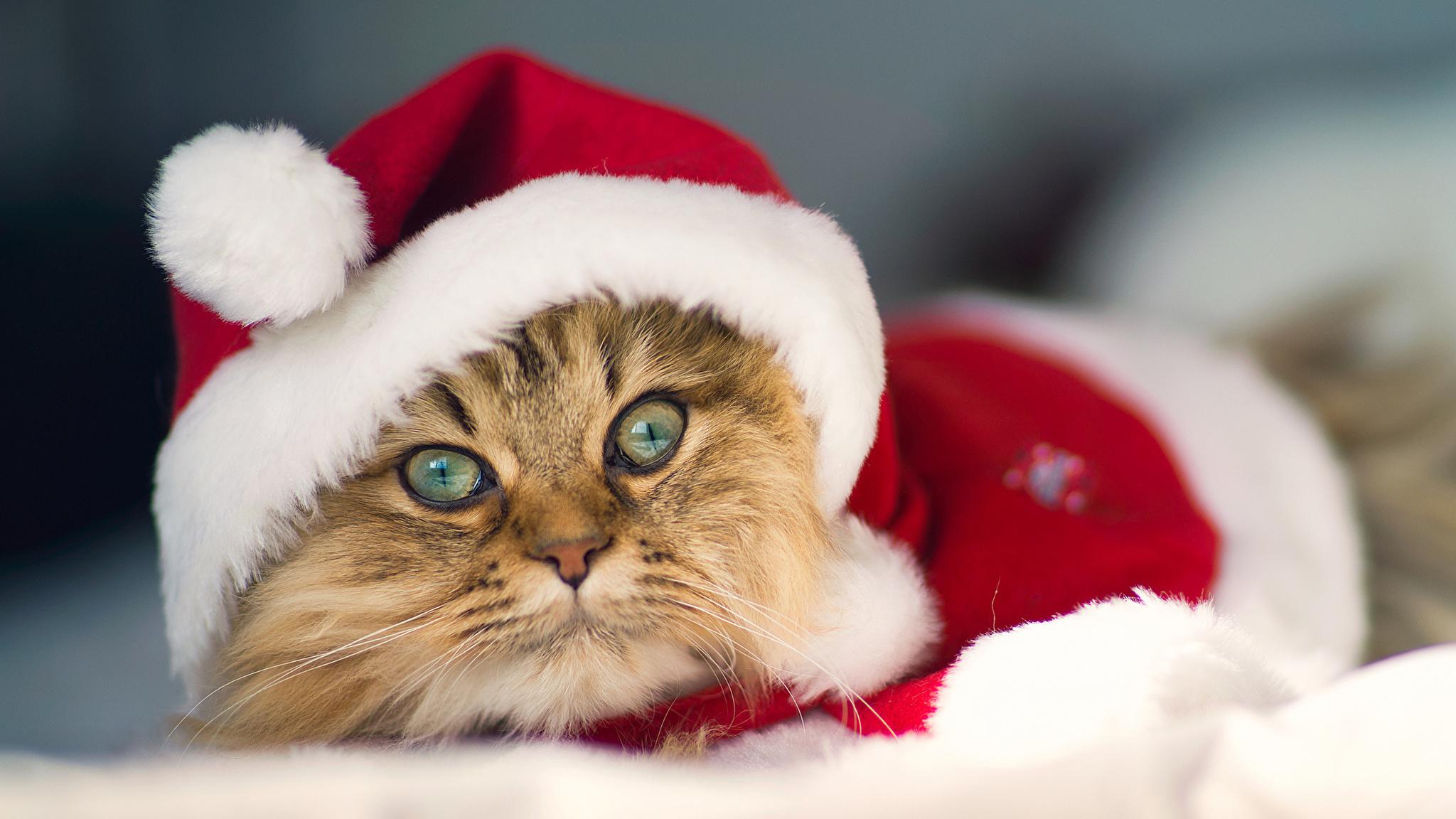 Кот под шапкой  № 3059135 загрузить
