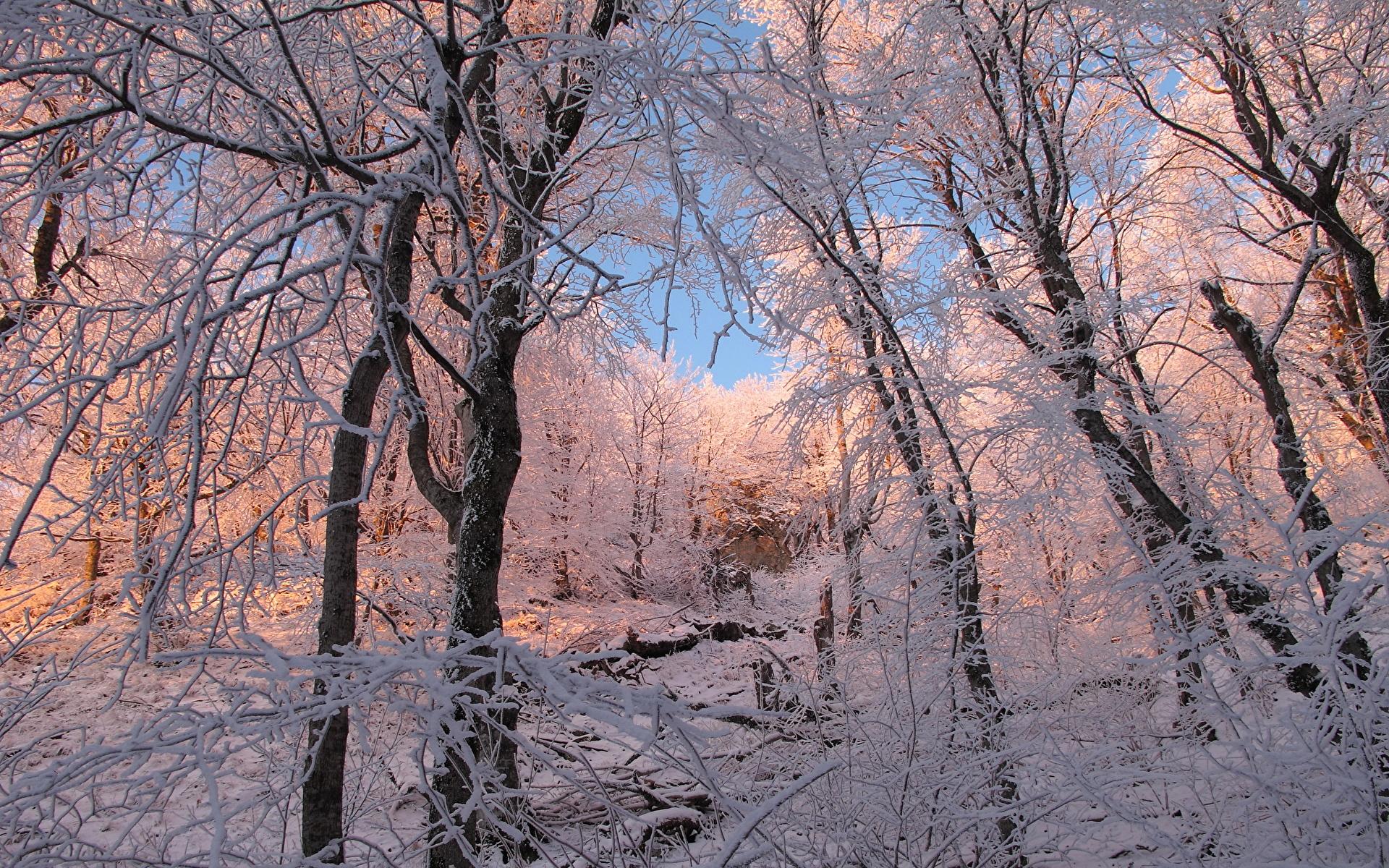 снег ветви лес snow branches forest  № 442865 без смс