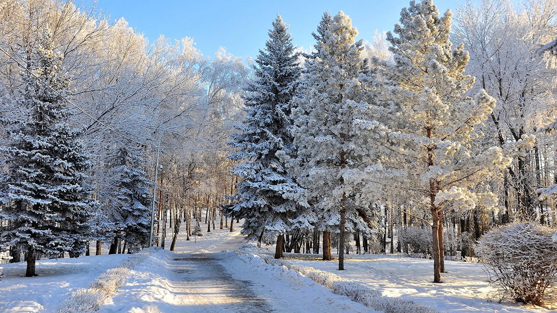 Парк зима ели  № 2388908  скачать