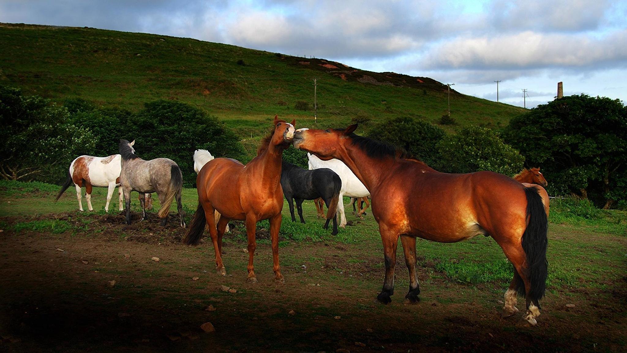 обои на рабочий стол 1920 1080 с лошадьми № 251442 бесплатно