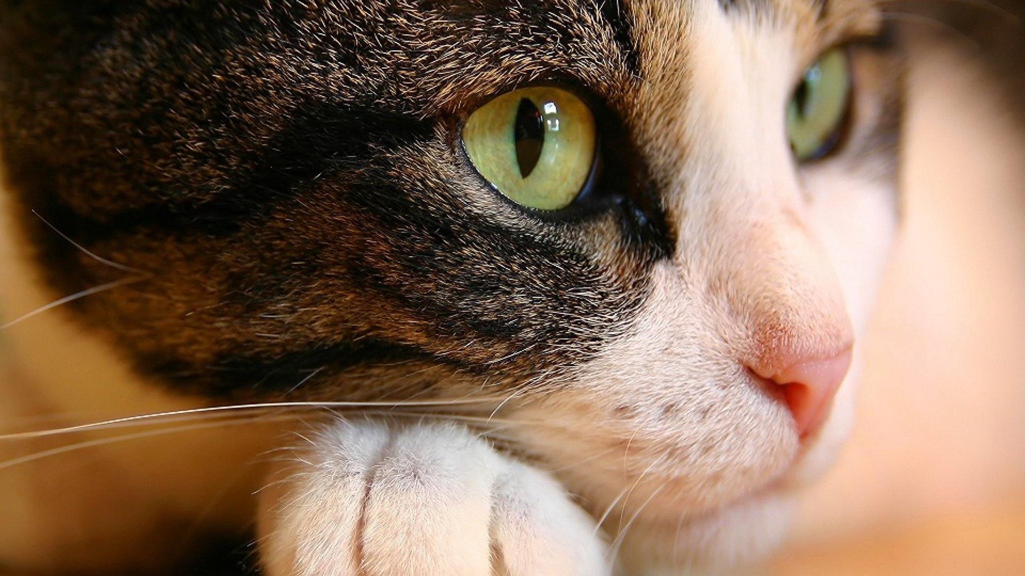 кошка зеленые глаза постель  № 3655509 без смс