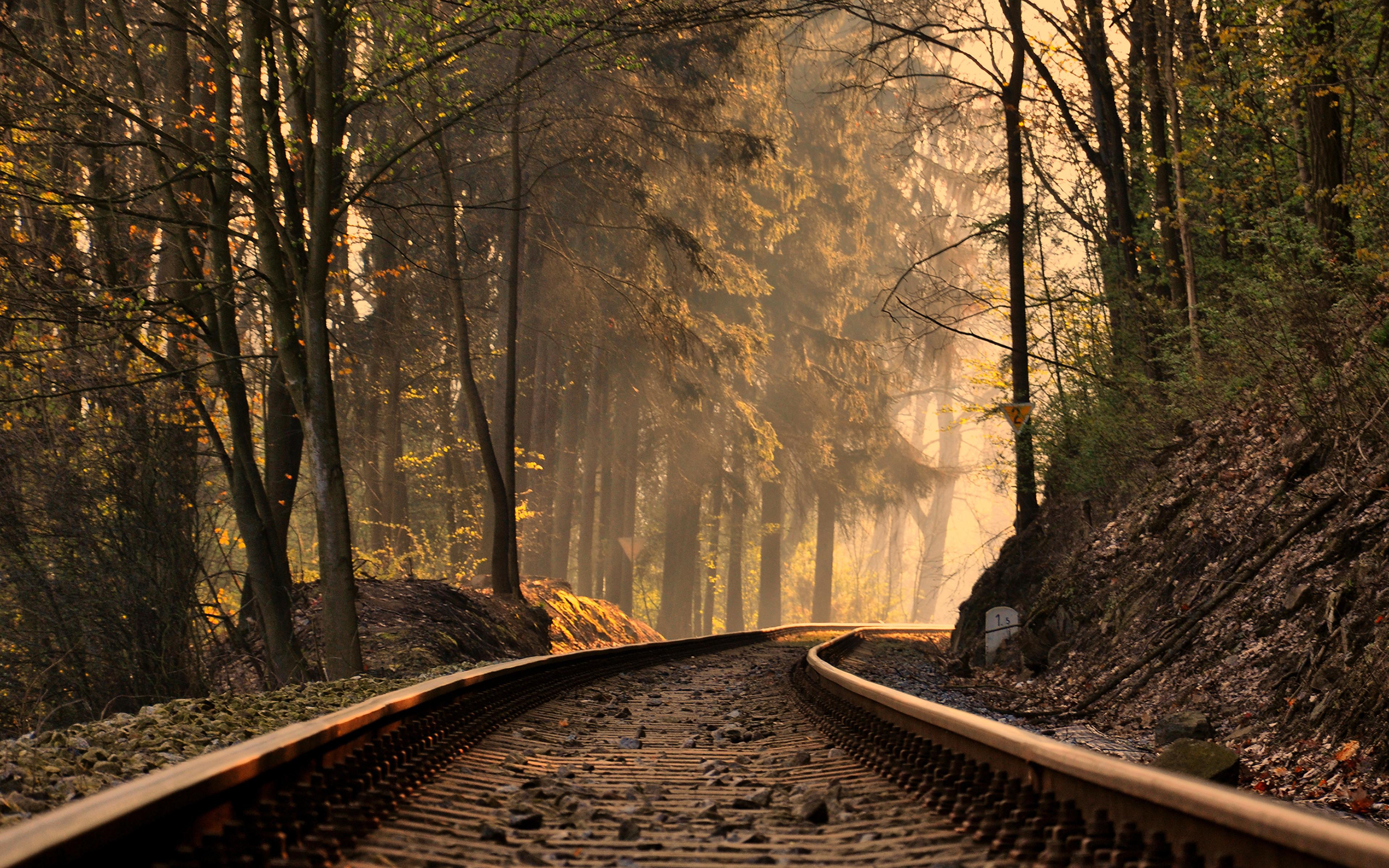рельсы железная дорога деревья туннель  № 3118404 без смс