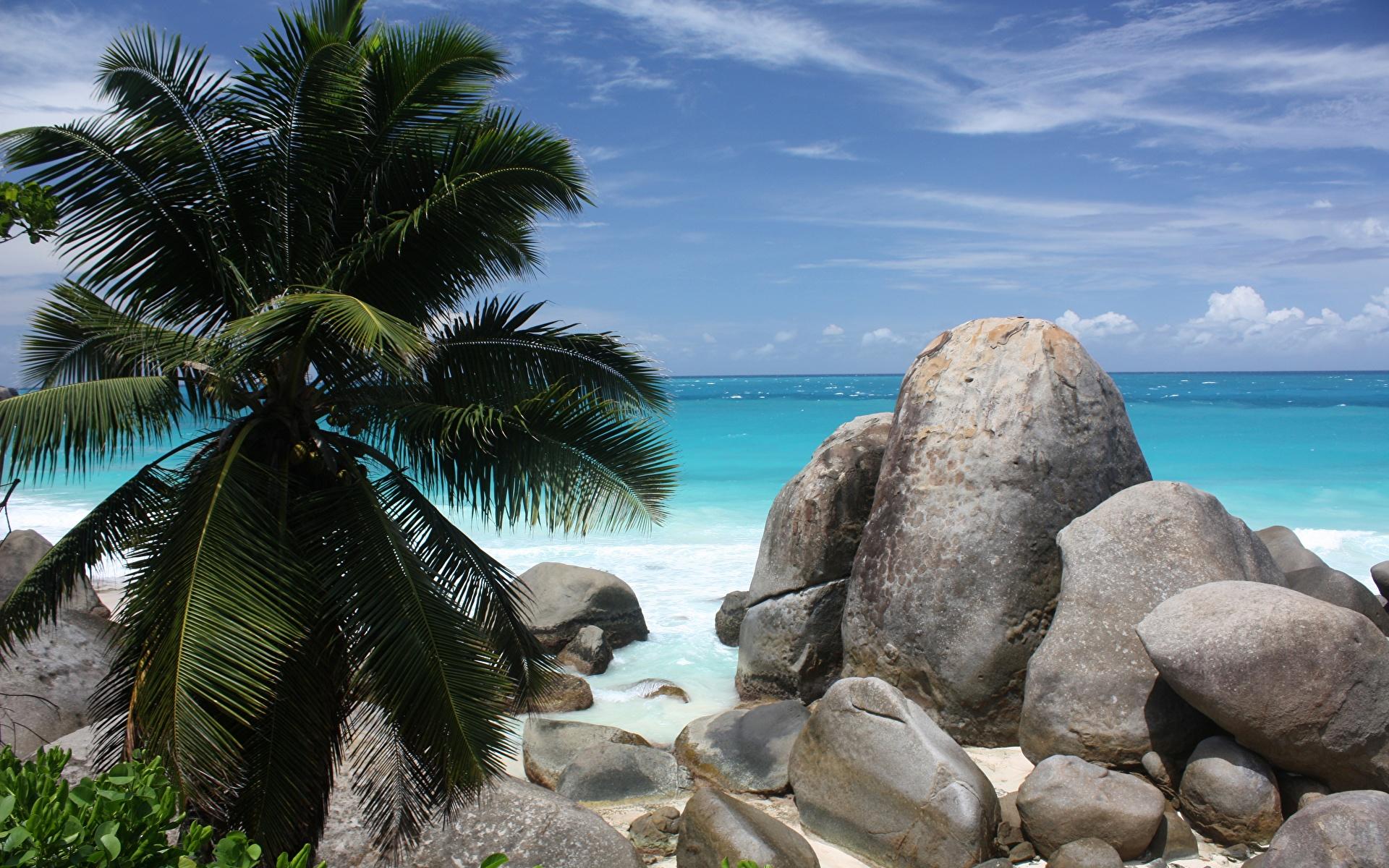 берег камни пальмы shore stones palm trees  № 792048 бесплатно