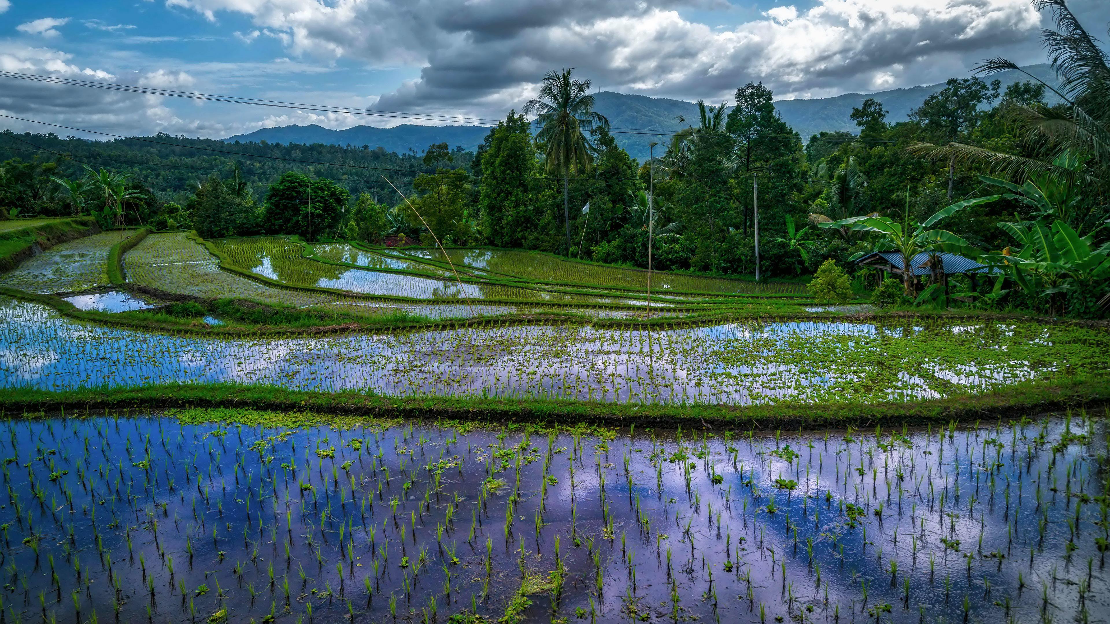 природа река деревь облака Индонезия  № 1670696 загрузить