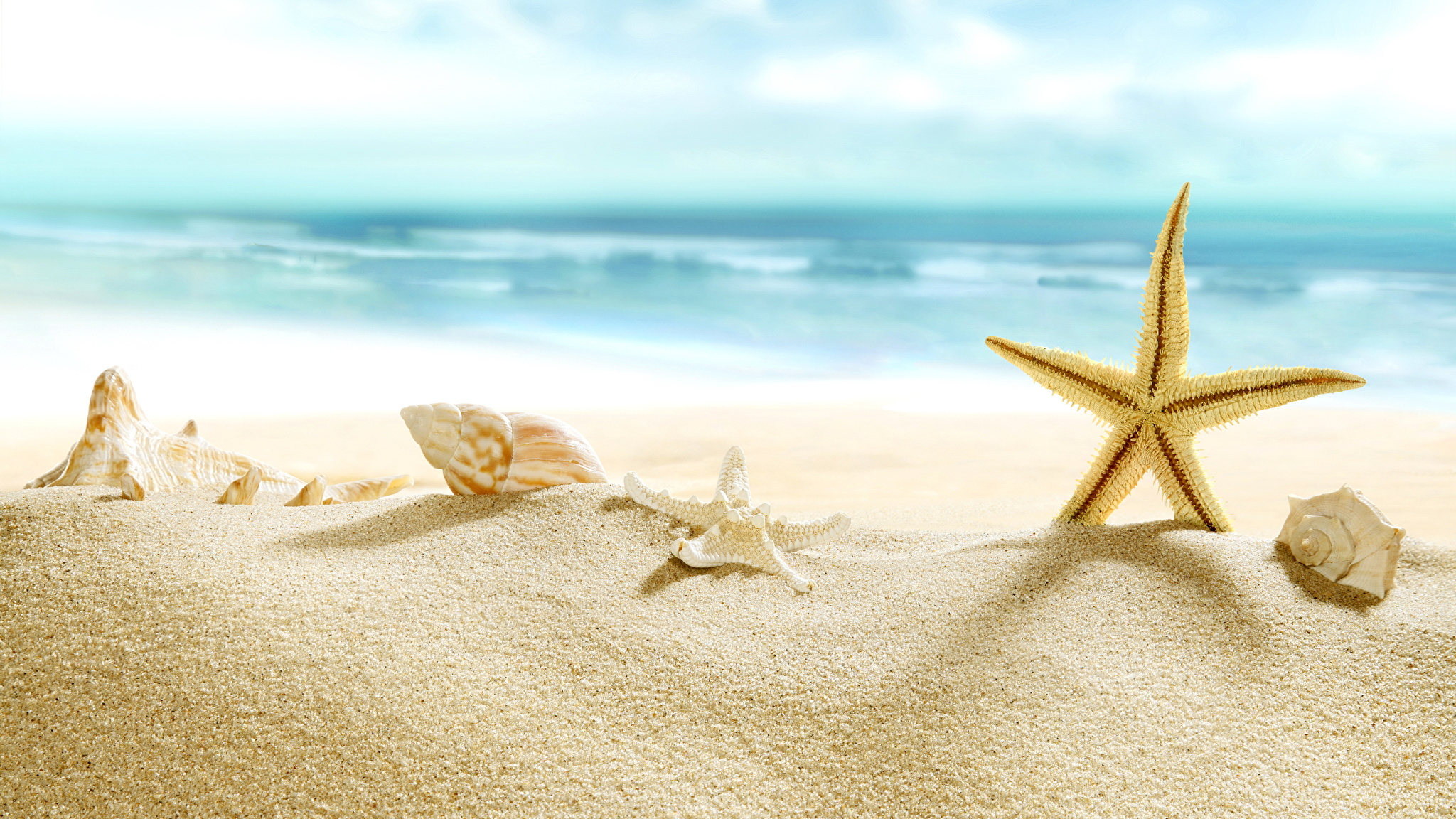 природа ракушка песок nature shell sand  № 1246759 без смс
