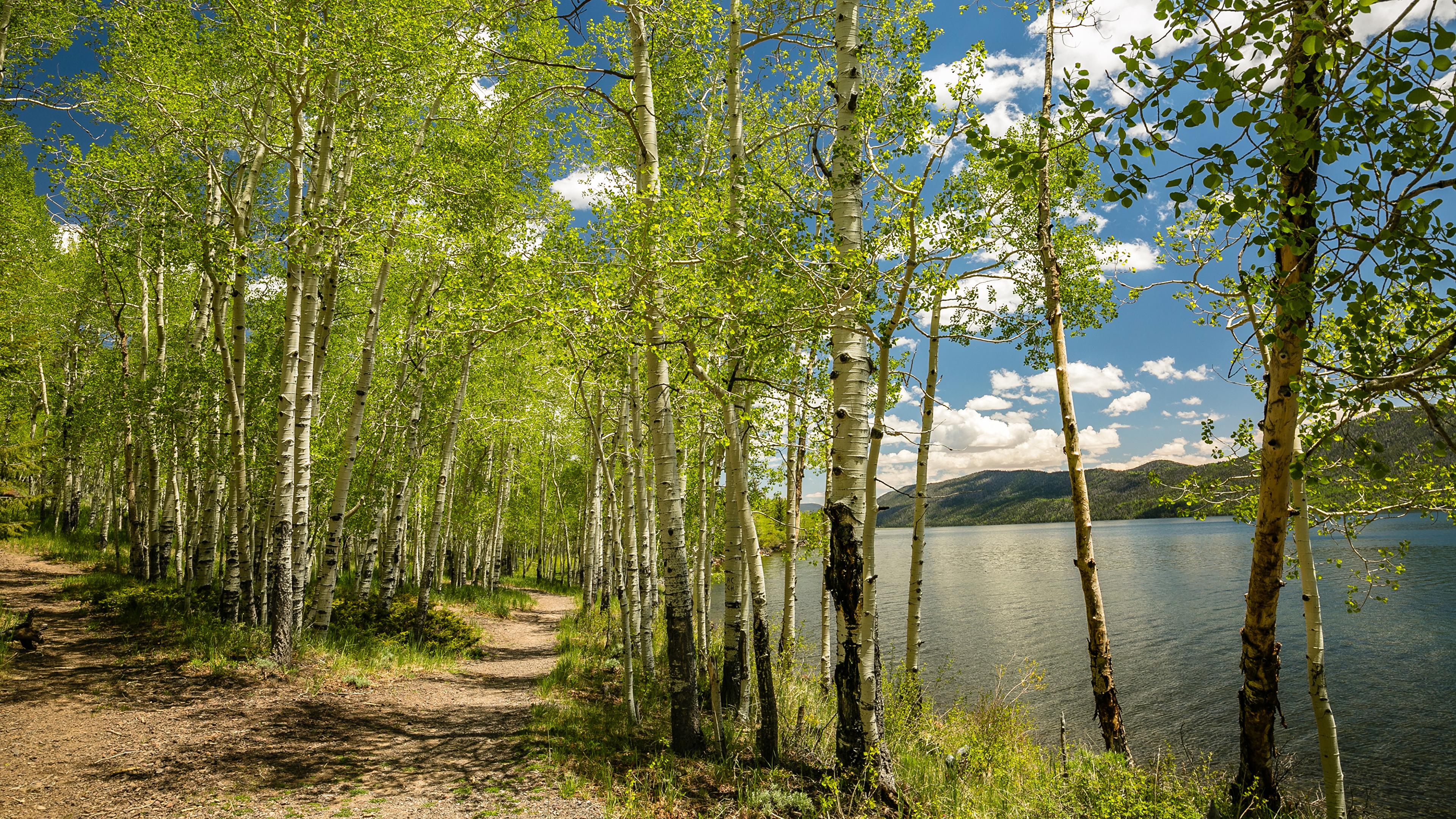 природа береза деревья вода озеро лес  № 2791947 бесплатно