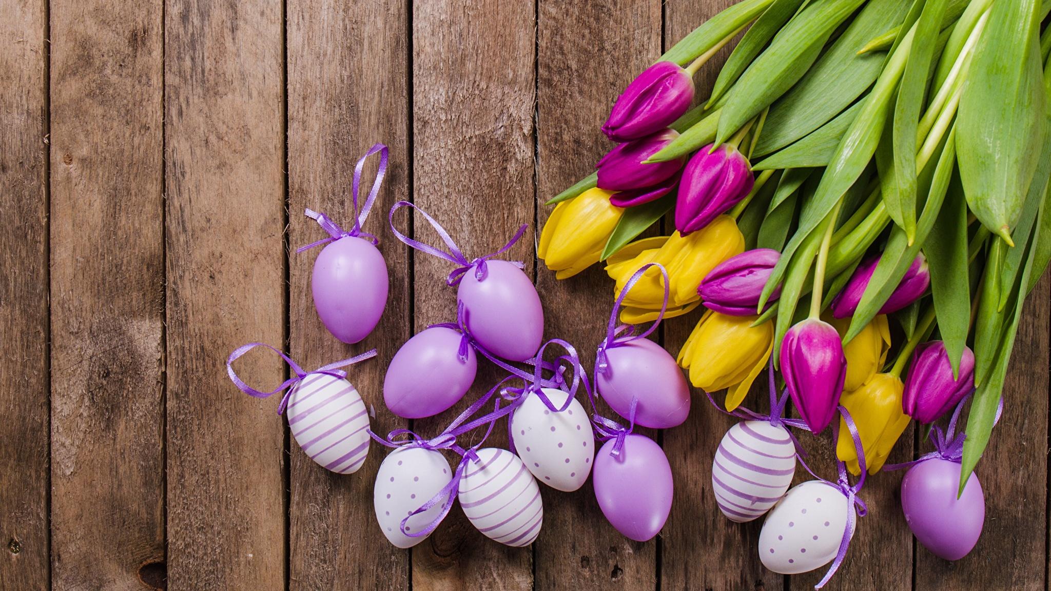 природа кролик цветы тюльпаны яйца пасха  № 271790 бесплатно
