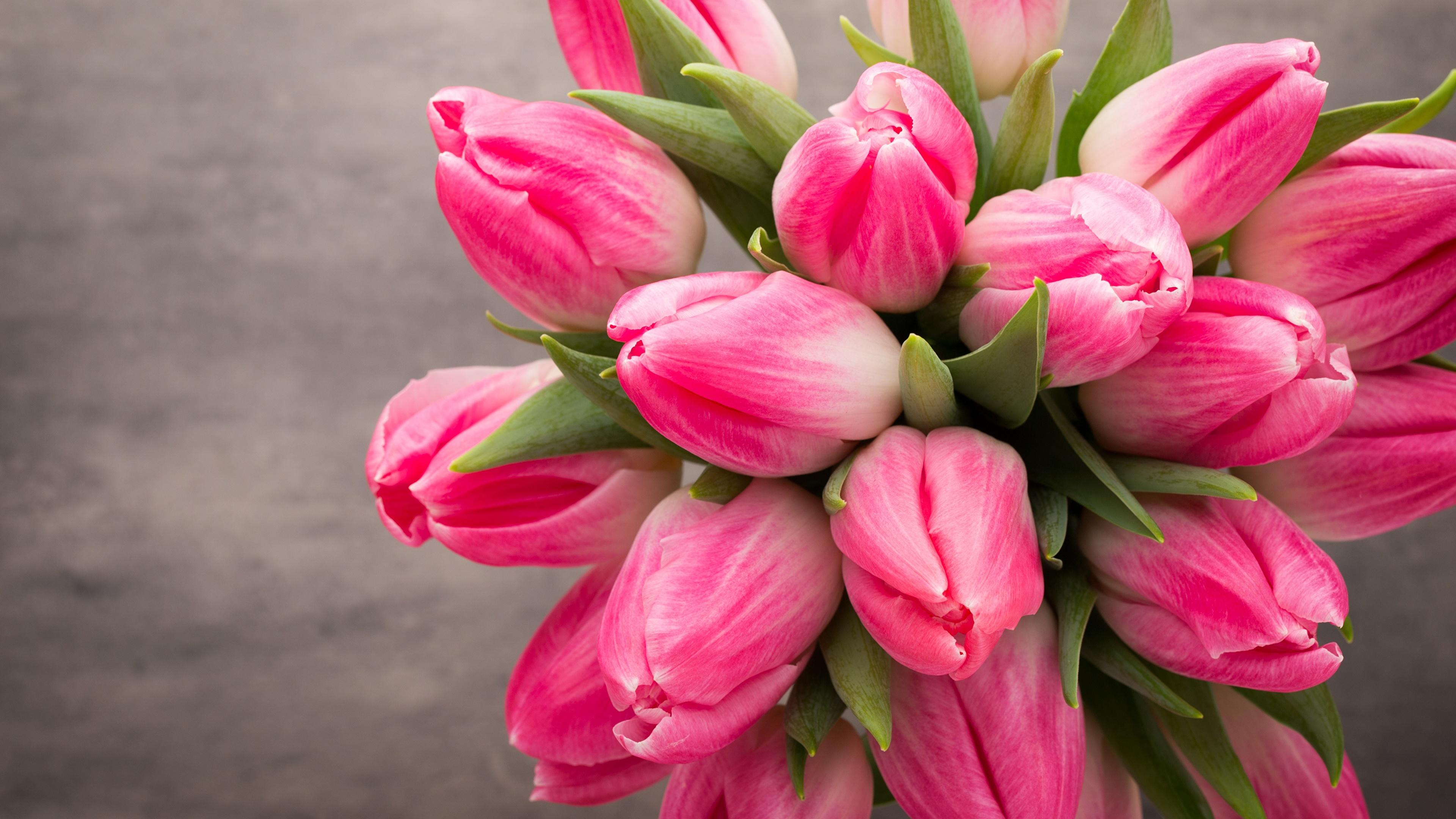 букет,тюльпаны,листья  № 415790  скачать