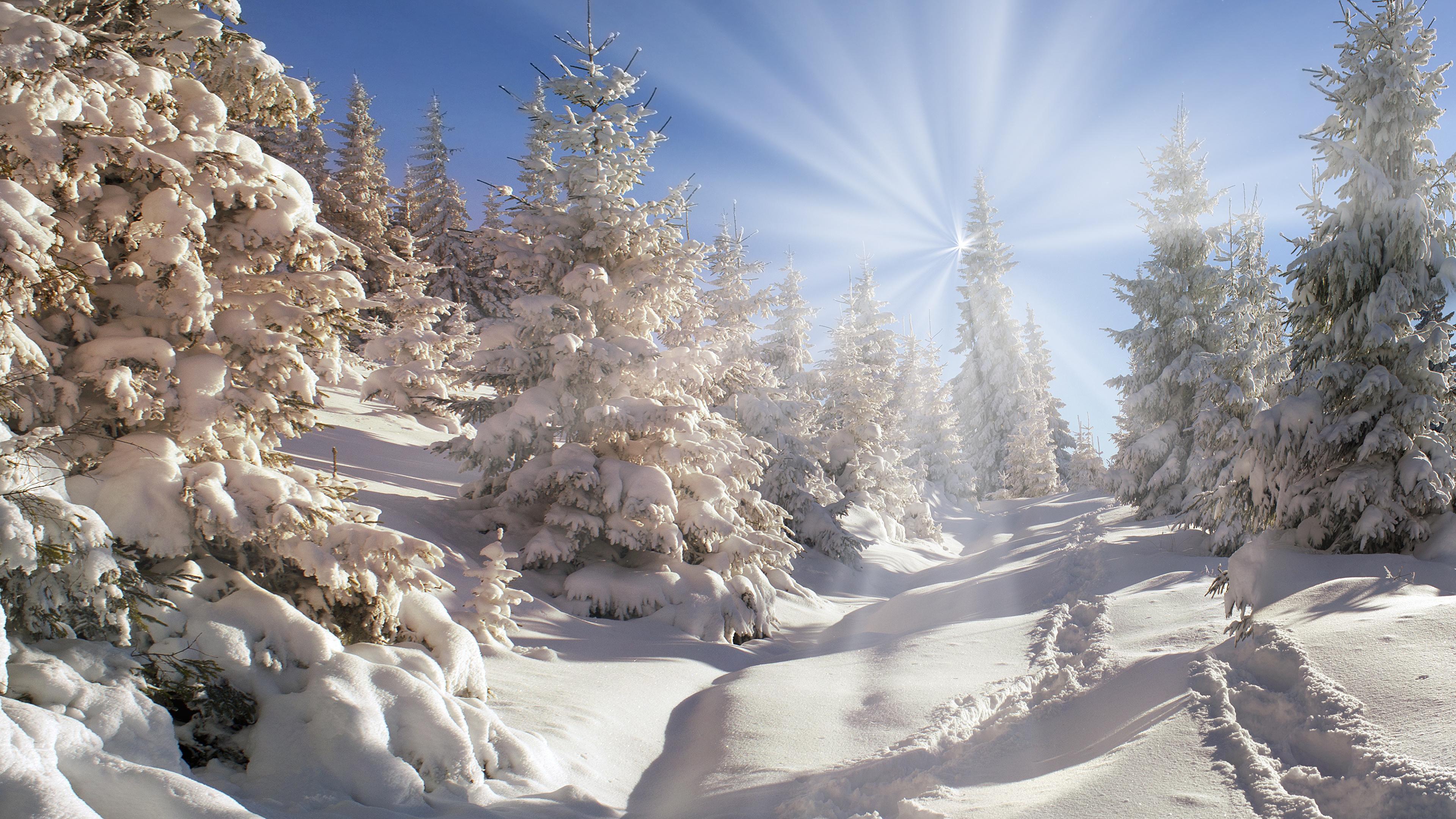 зимний солнечный лес  № 310463 бесплатно