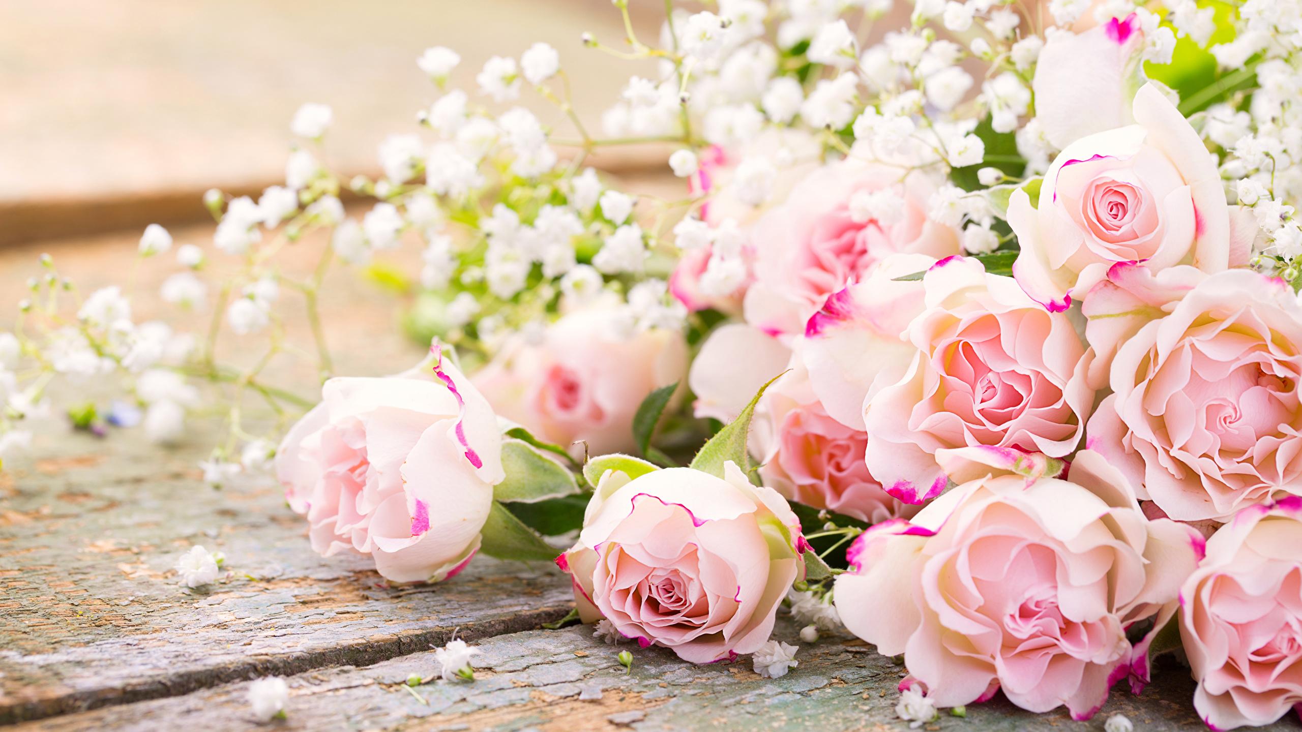 Нежные цветы фото и картинки