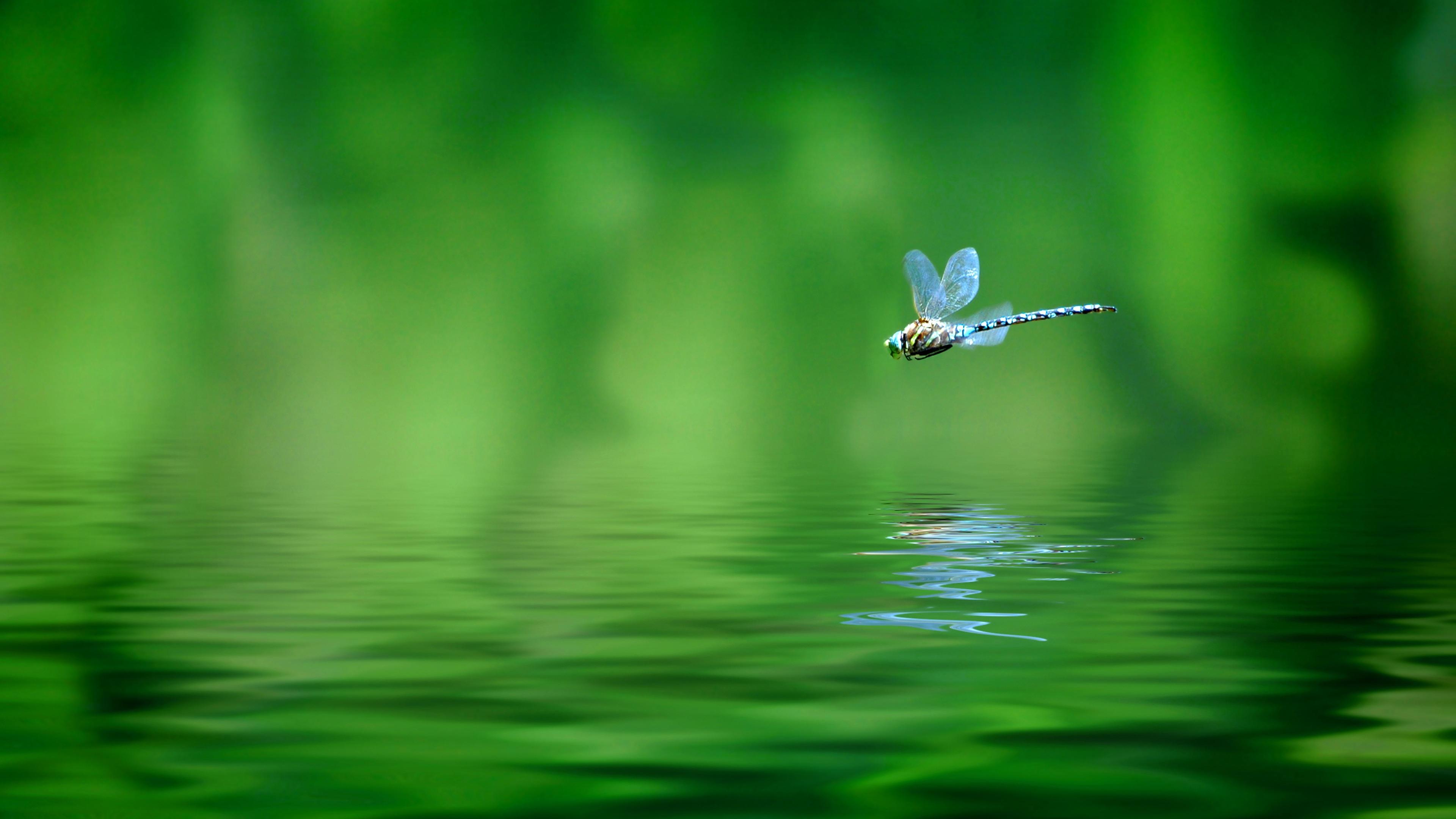 Орез взлетающий из воды  № 1188016  скачать